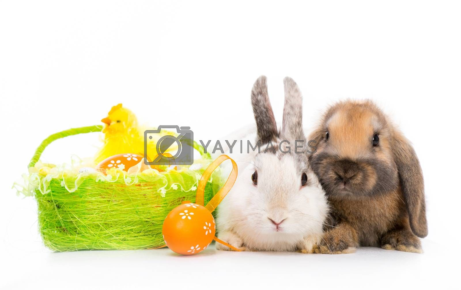 Royalty free image of rabbits on white by GekaSkr