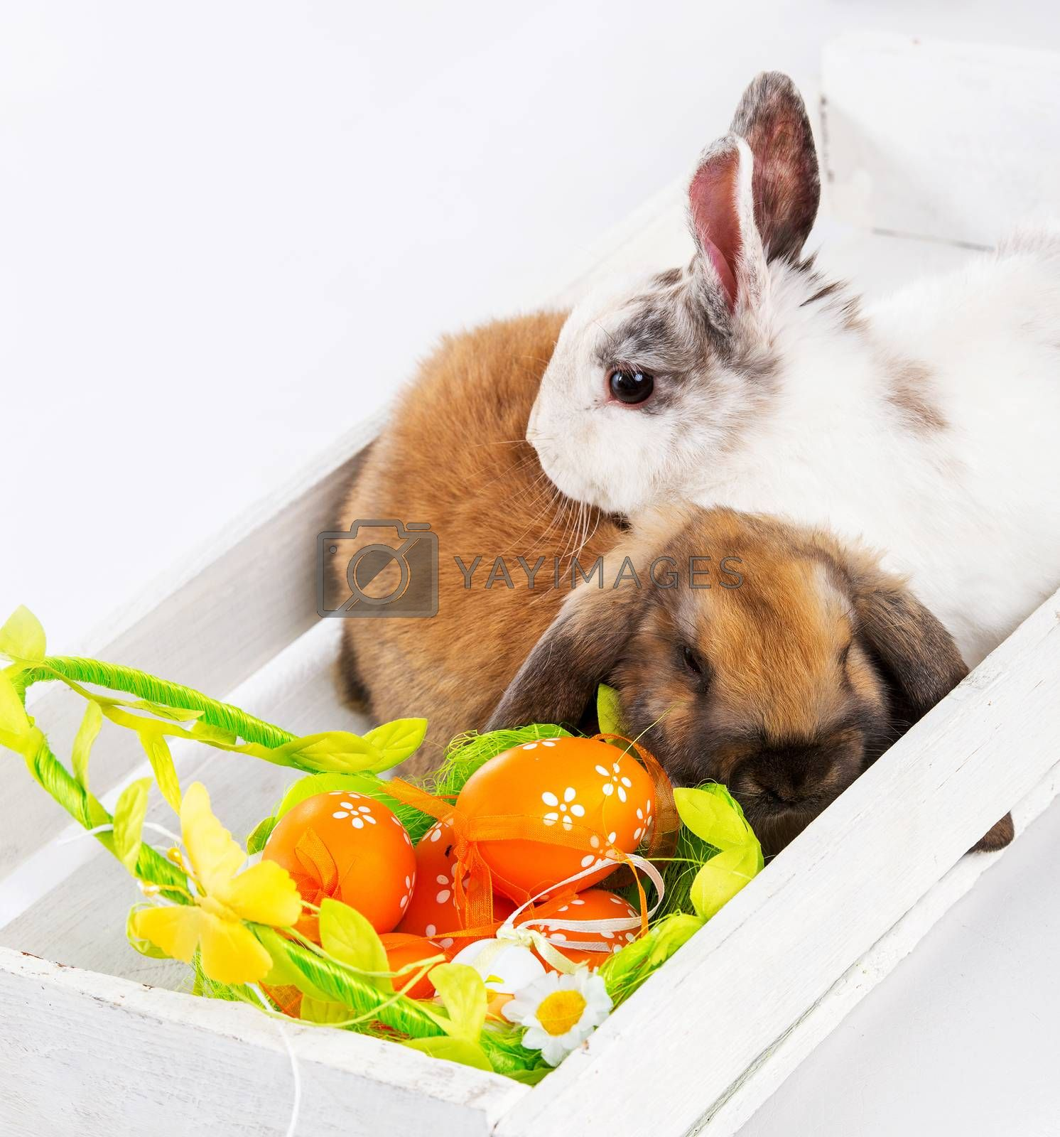 Royalty free image of rabbits and easter basket by GekaSkr