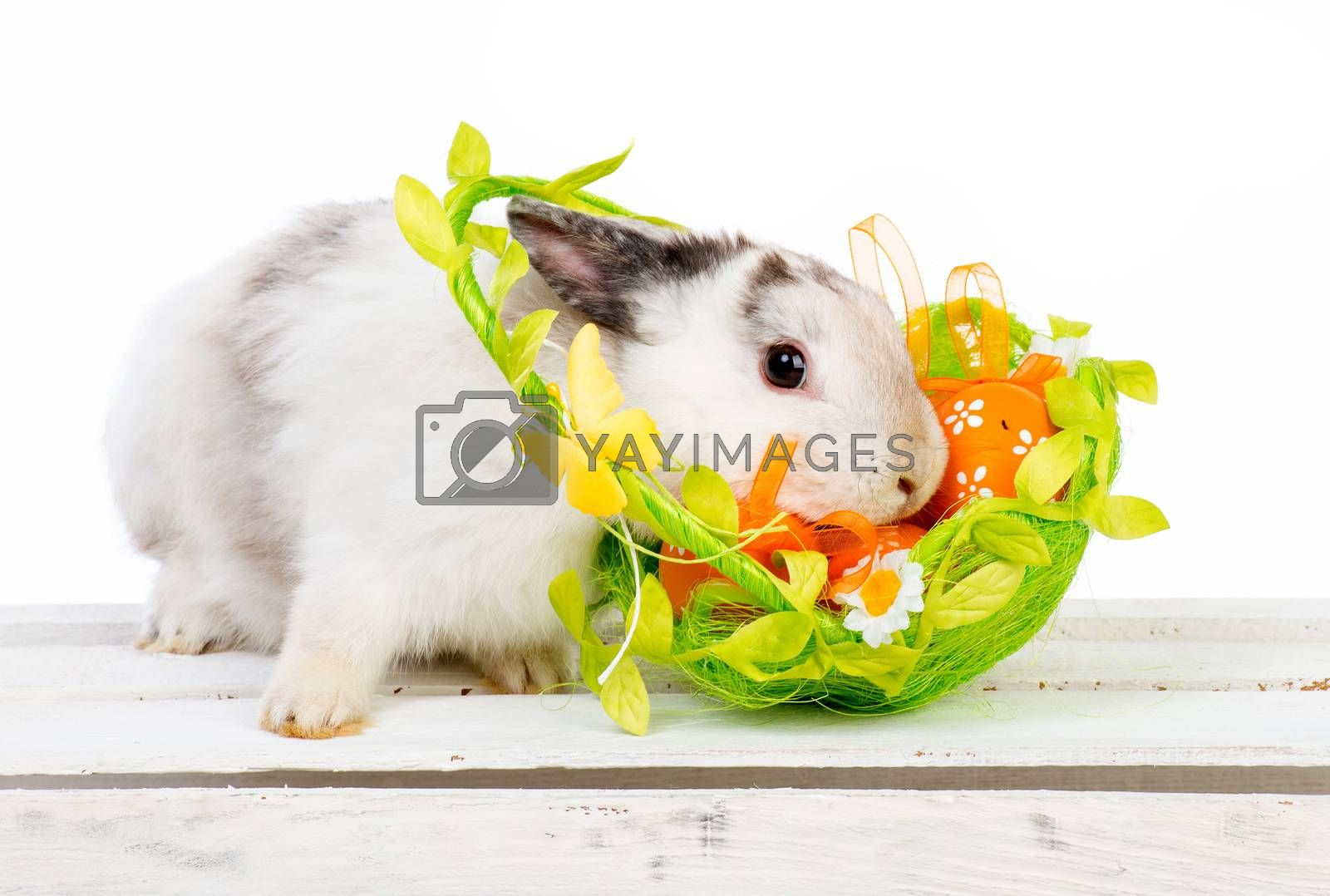 Royalty free image of Easter bunny with basket by GekaSkr