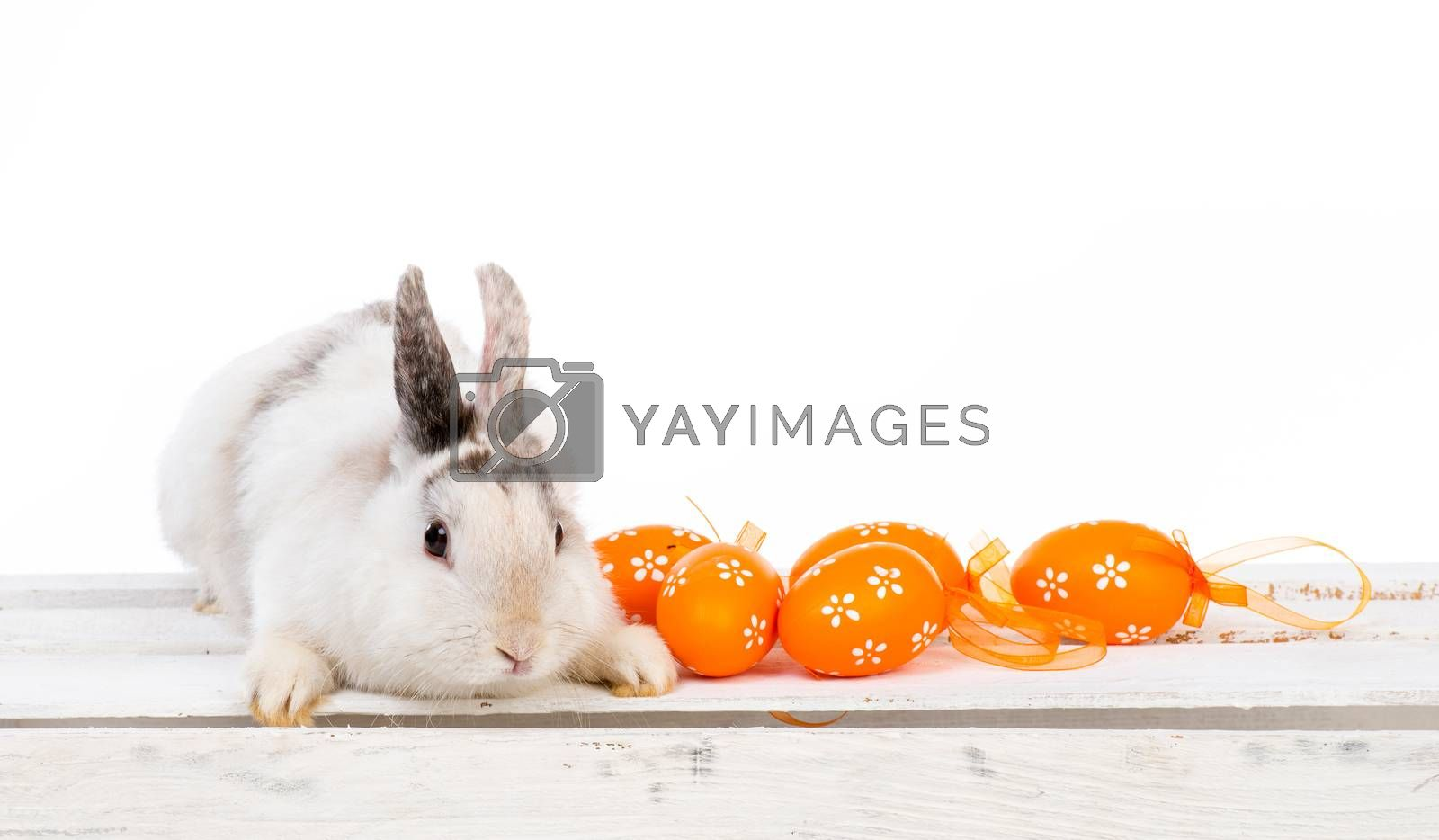 Royalty free image of rabbit with Easter eggs by GekaSkr