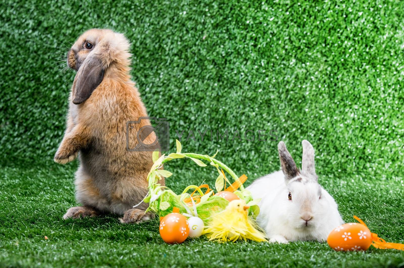 Royalty free image of two rabbits on grass by GekaSkr