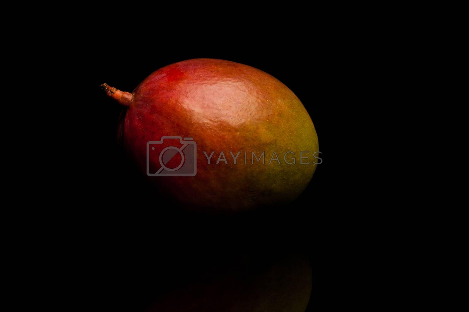 Royalty free image of Mango by furo_felix