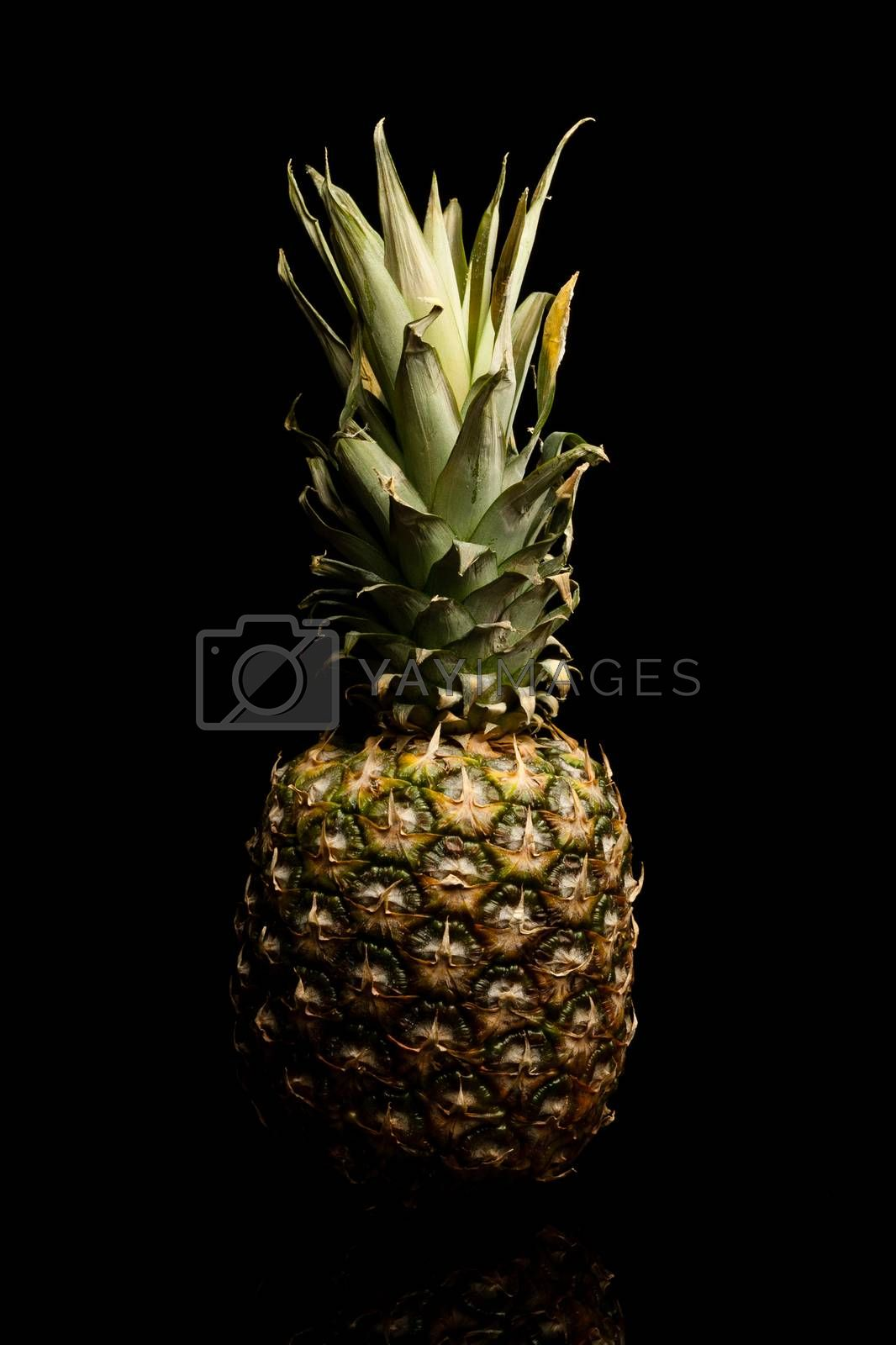 Royalty free image of Ananas by furo_felix