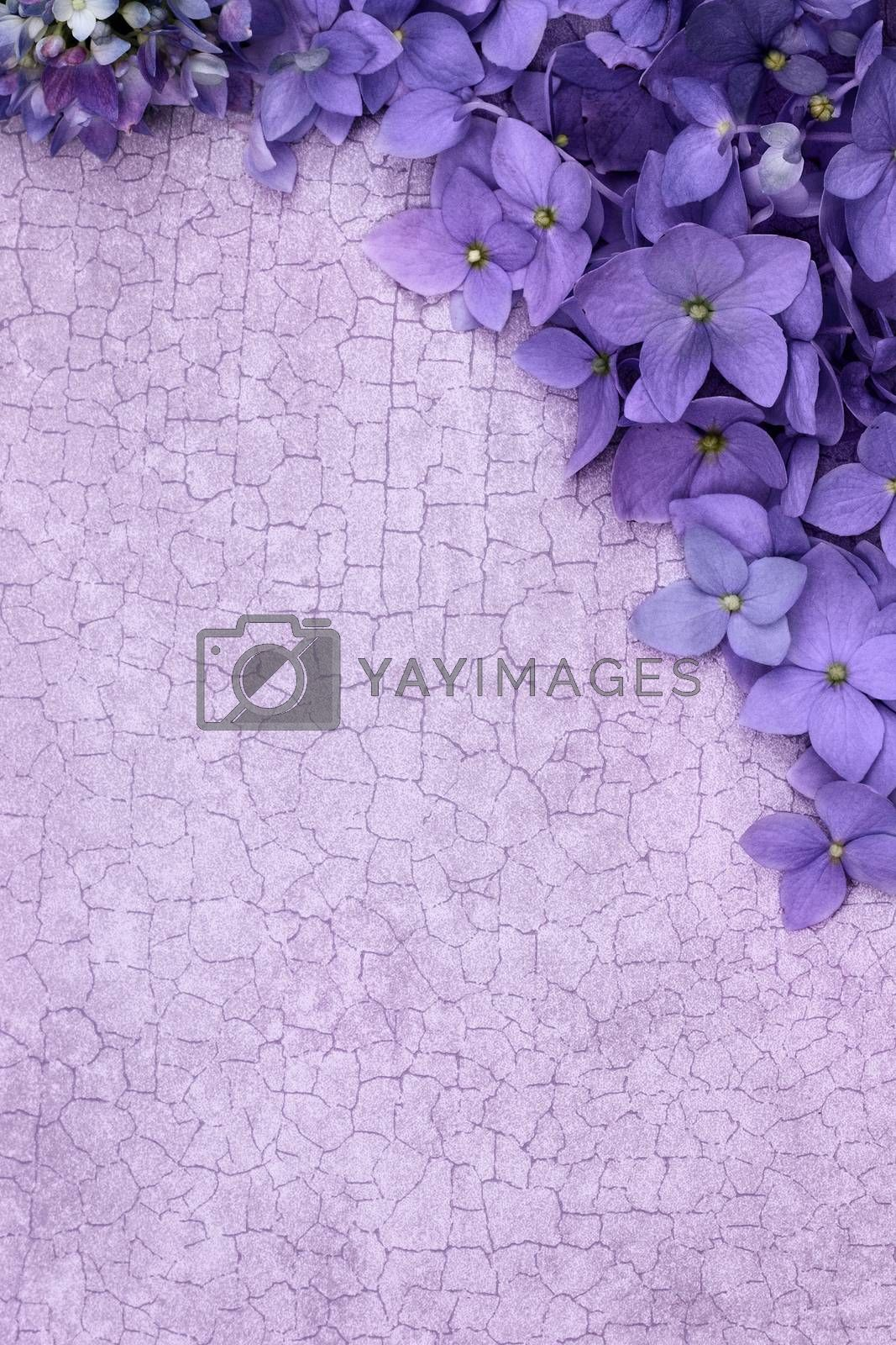 Royalty free image of Purple Floral Background by StephanieFrey