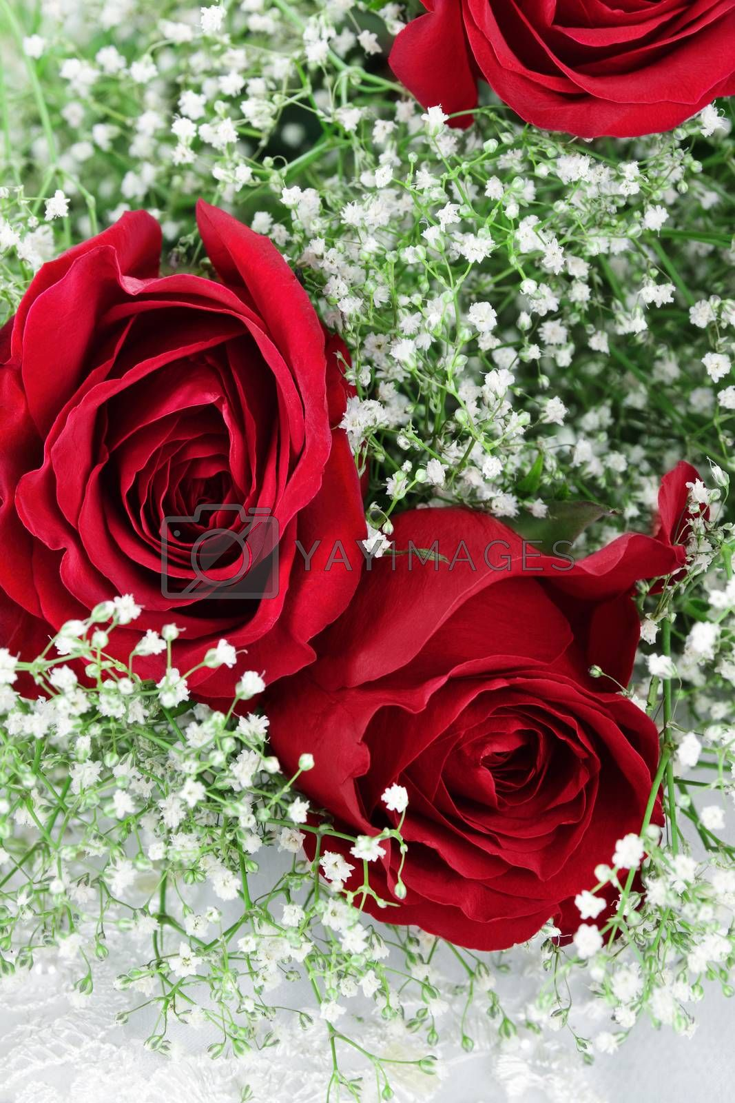 Royalty free image of Red Roses and Babys Breath by StephanieFrey