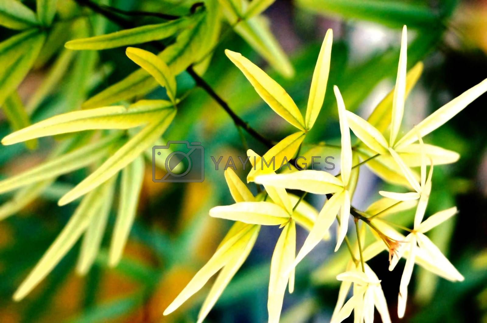 Royalty free image of tree fingers leaves by nattapatt