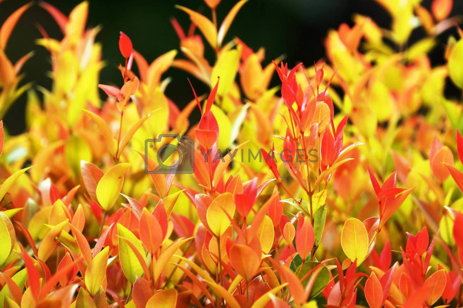Royalty free image of fire on new branches by nattapatt