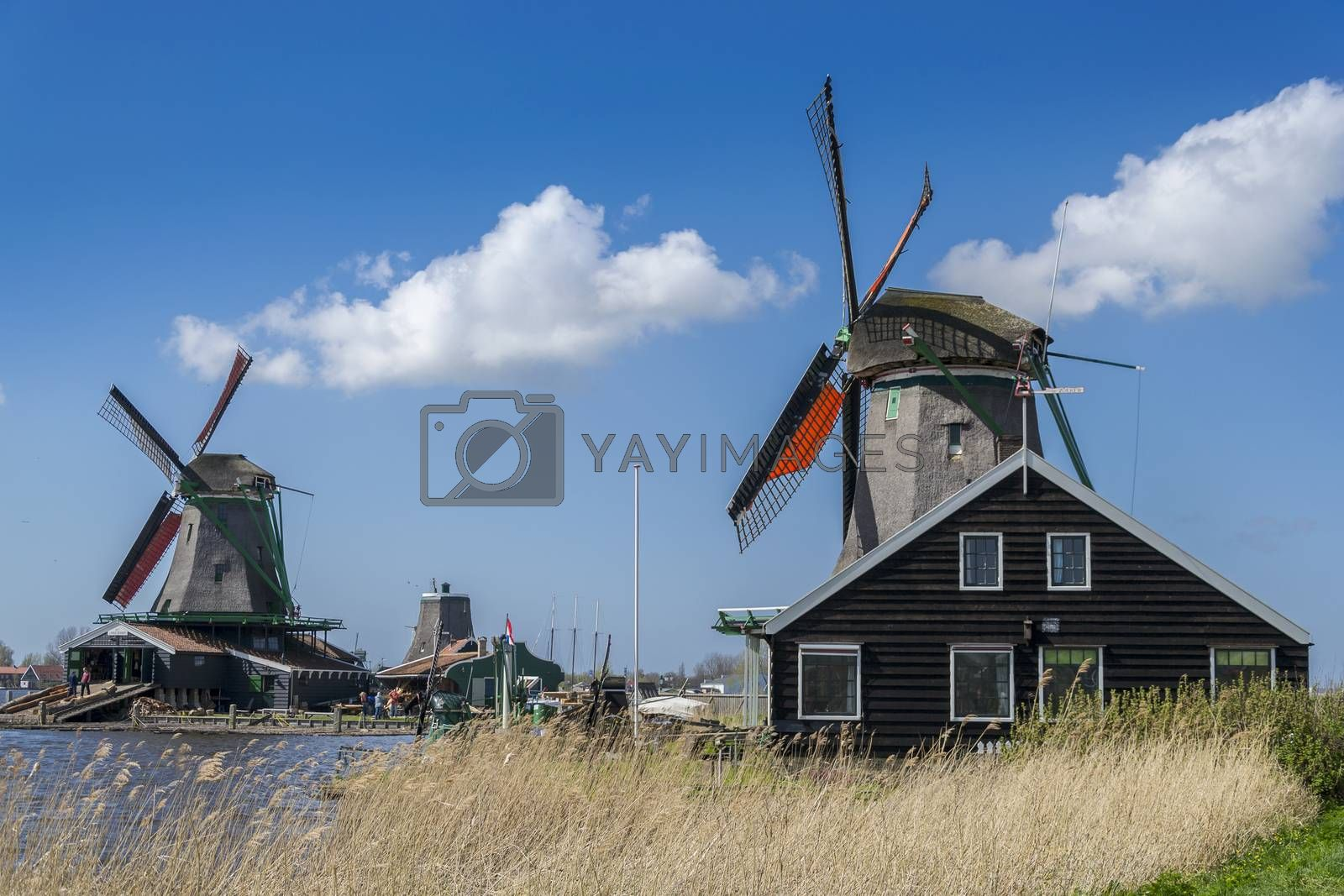 Royalty free image of windmills in Zaanse Schans near Amsterdam by enrico.lapponi