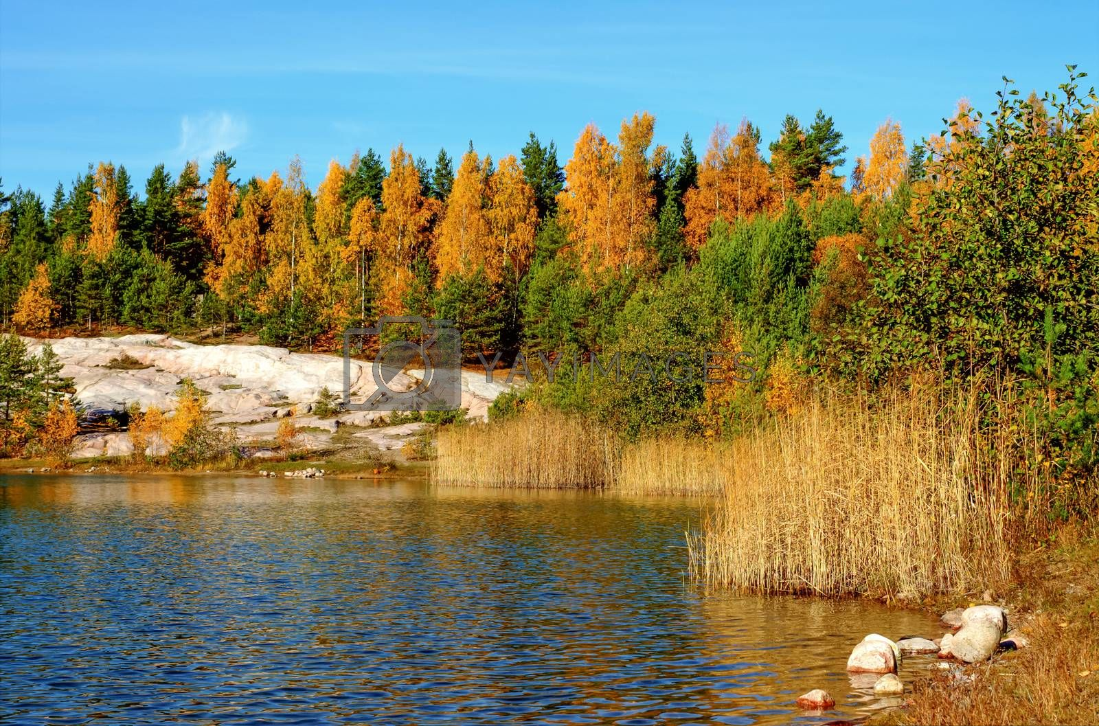 Royalty free image of Autumn lake landscape with bright colors by Alexanderphoto