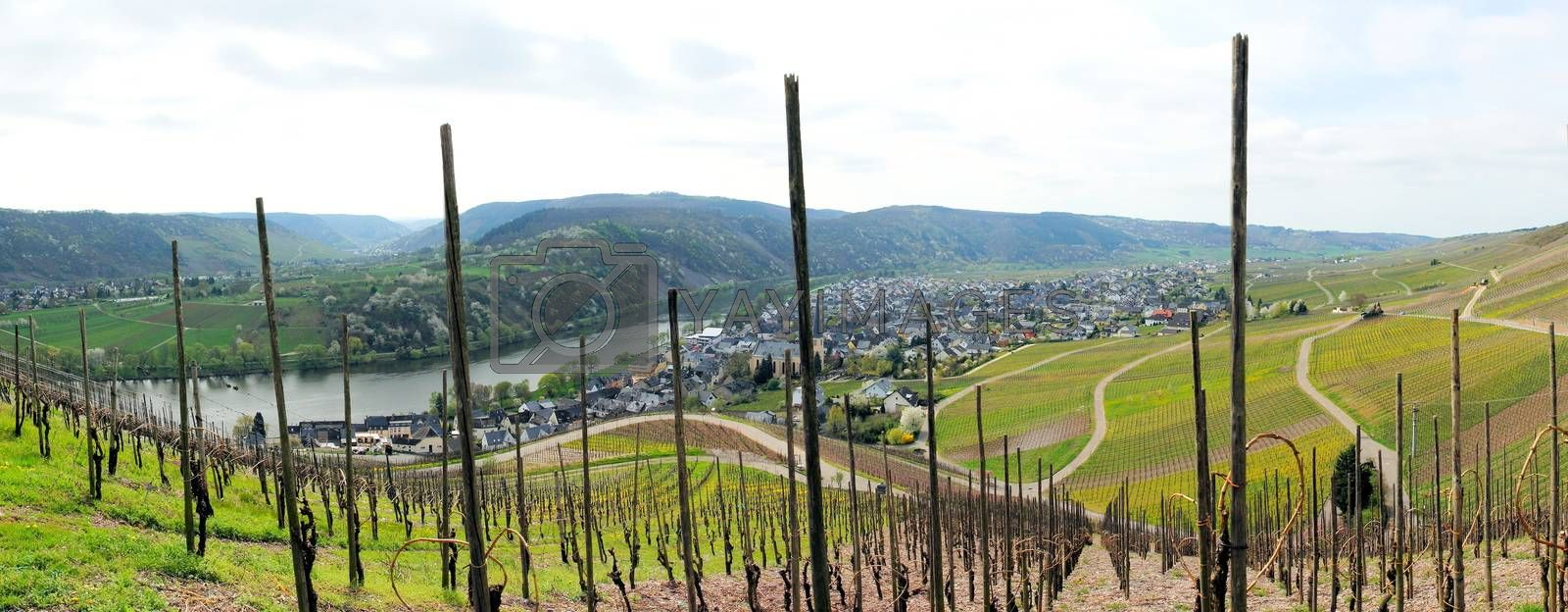 Royalty free image of Kröv with vineyards panorama by azurin