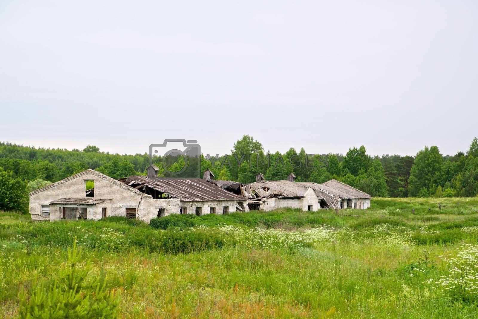 Royalty free image of Abandoned farm by dyvan