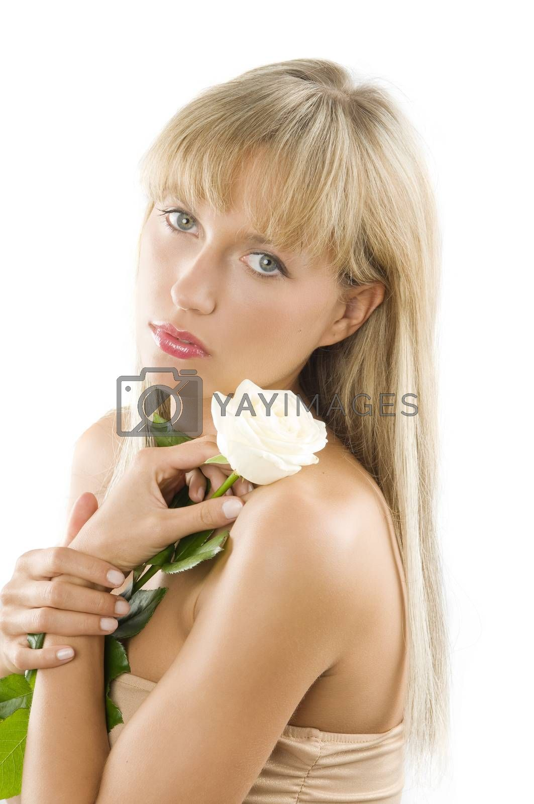 Royalty free image of the white rose by fotoCD