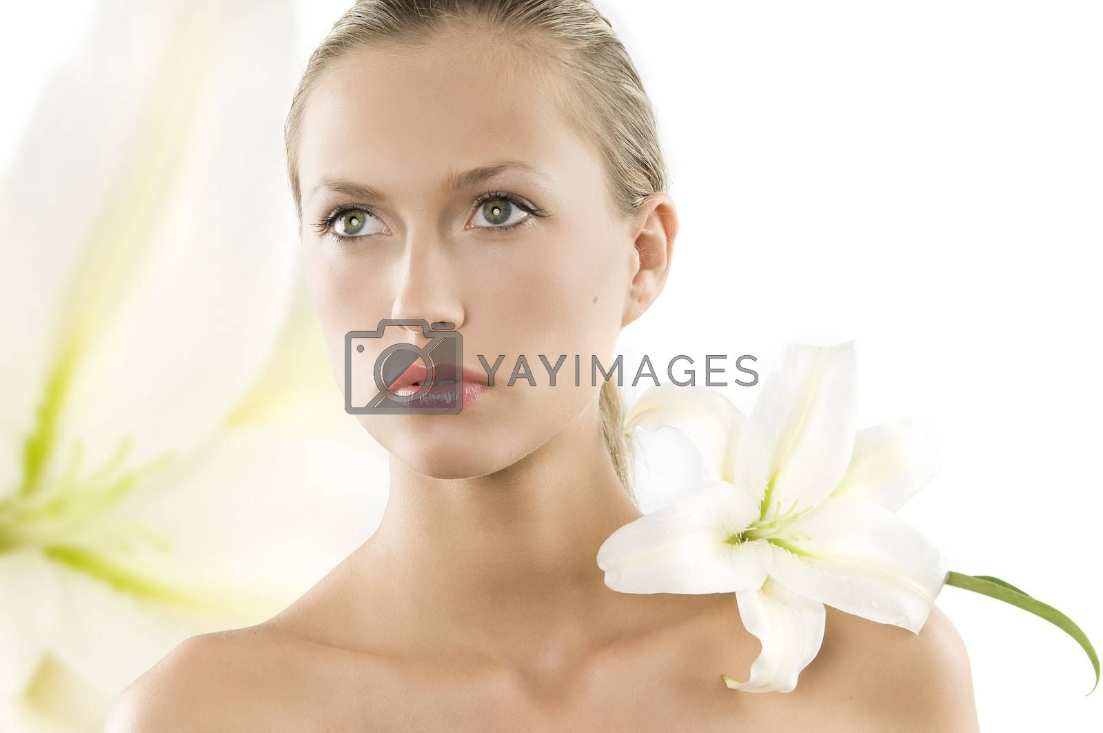 Royalty free image of white lilly by fotoCD