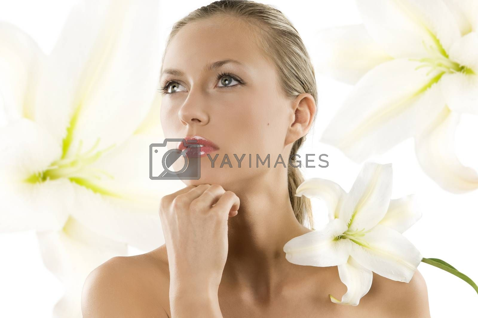 Royalty free image of white lily by fotoCD