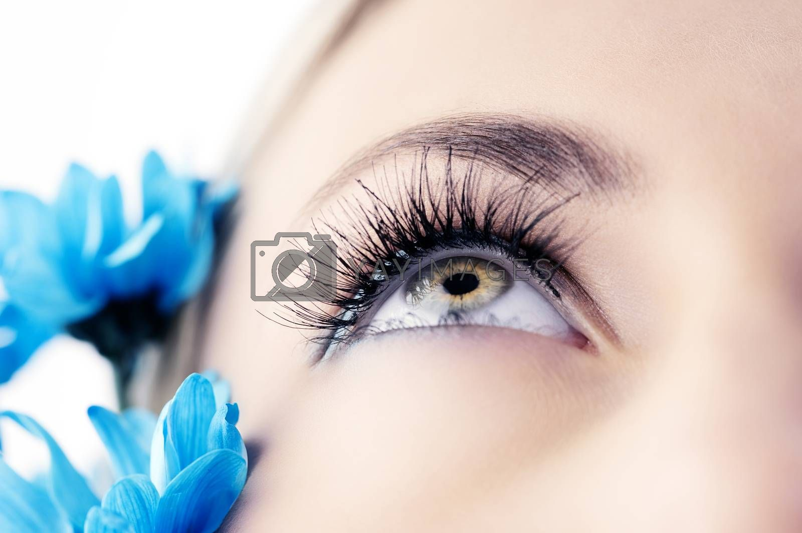 Royalty free image of the eye closeup by fotoCD