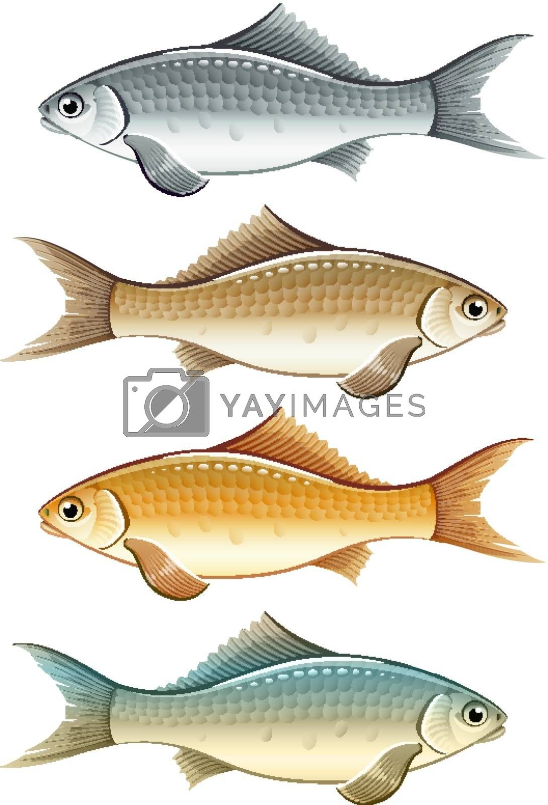 Royalty free image of Set of live colour fish by LoopAll