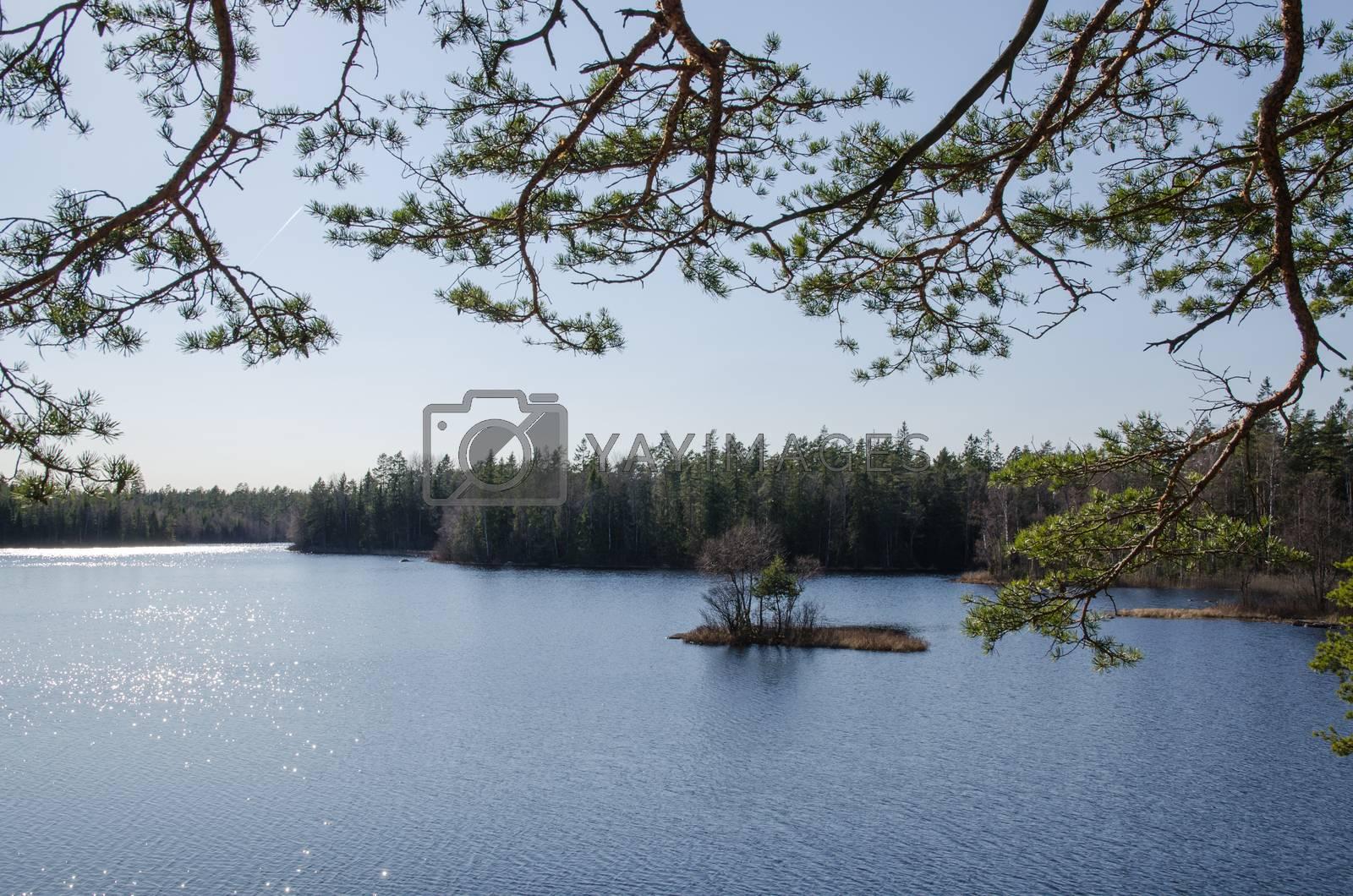 Royalty free image of Woodland lake view by olandsfokus