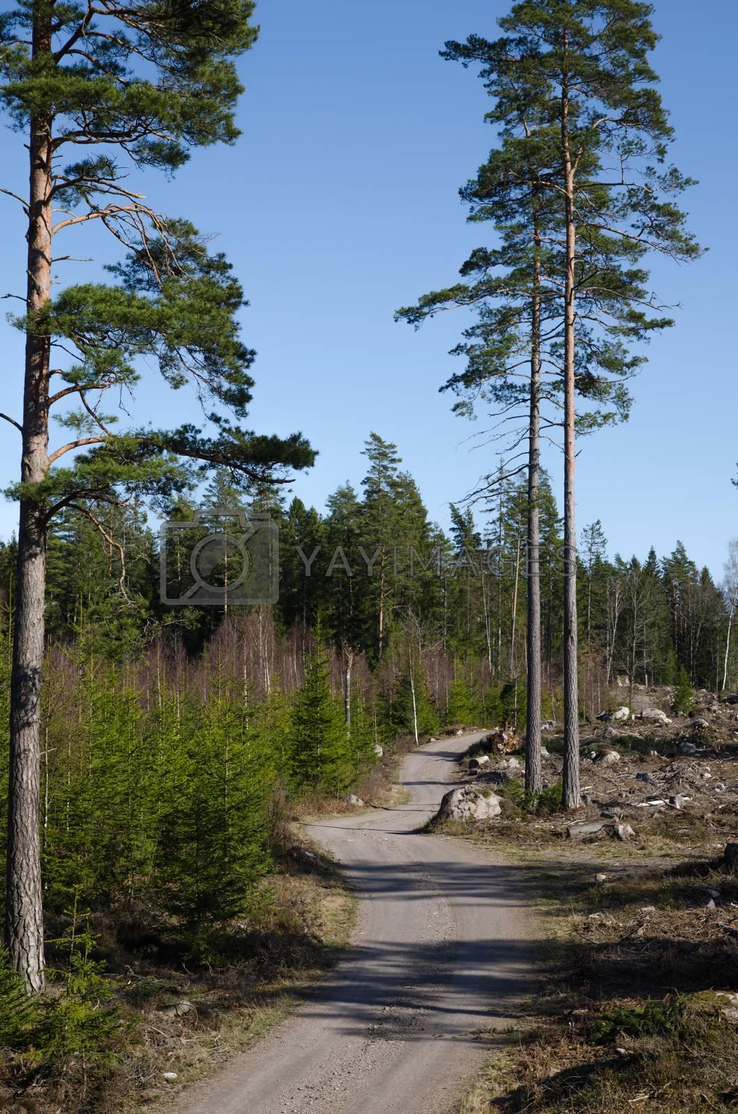 Royalty free image of Winding dirt road by olandsfokus