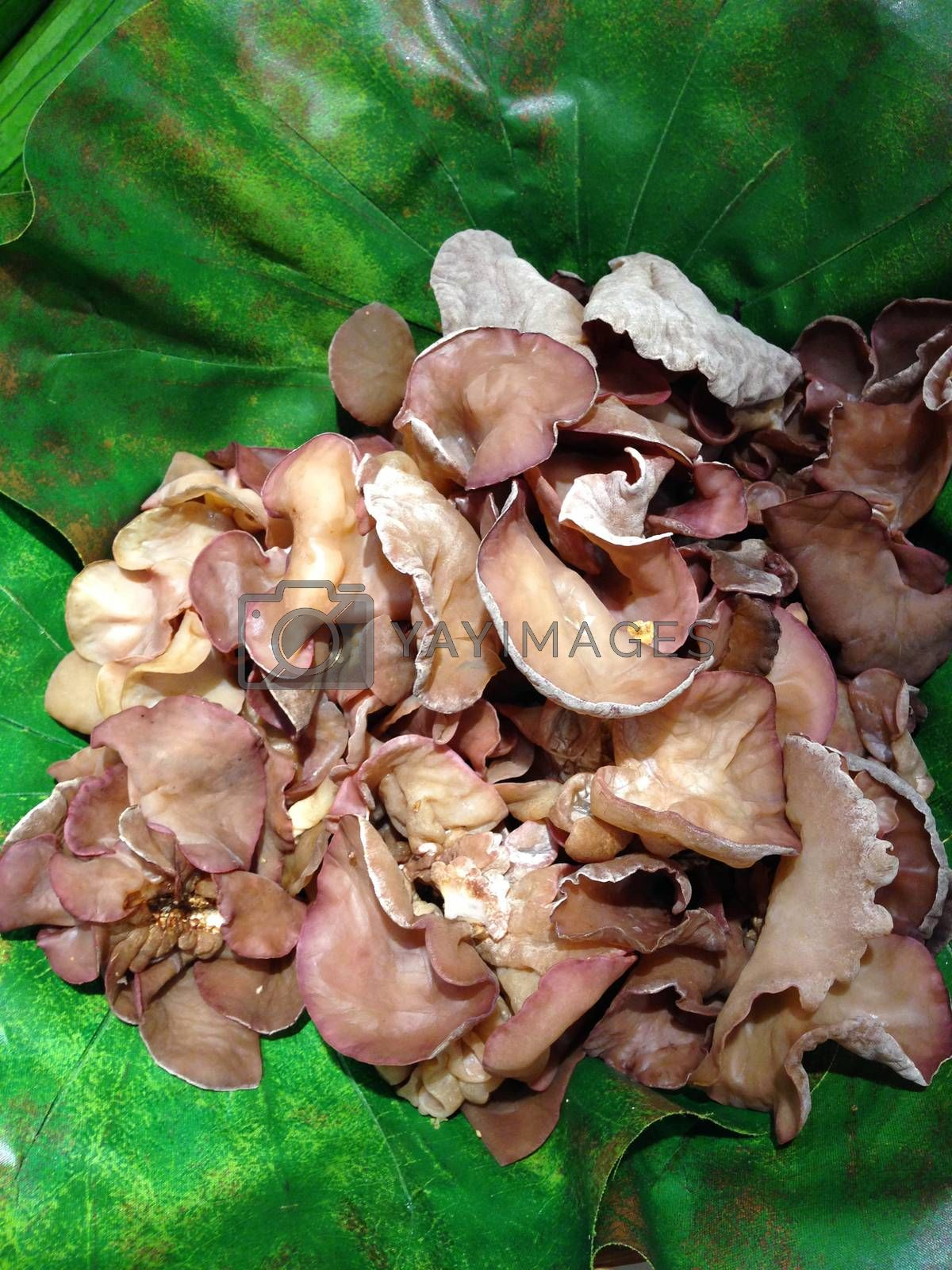 Royalty free image of the raw ear mushroom in a basket by pandara