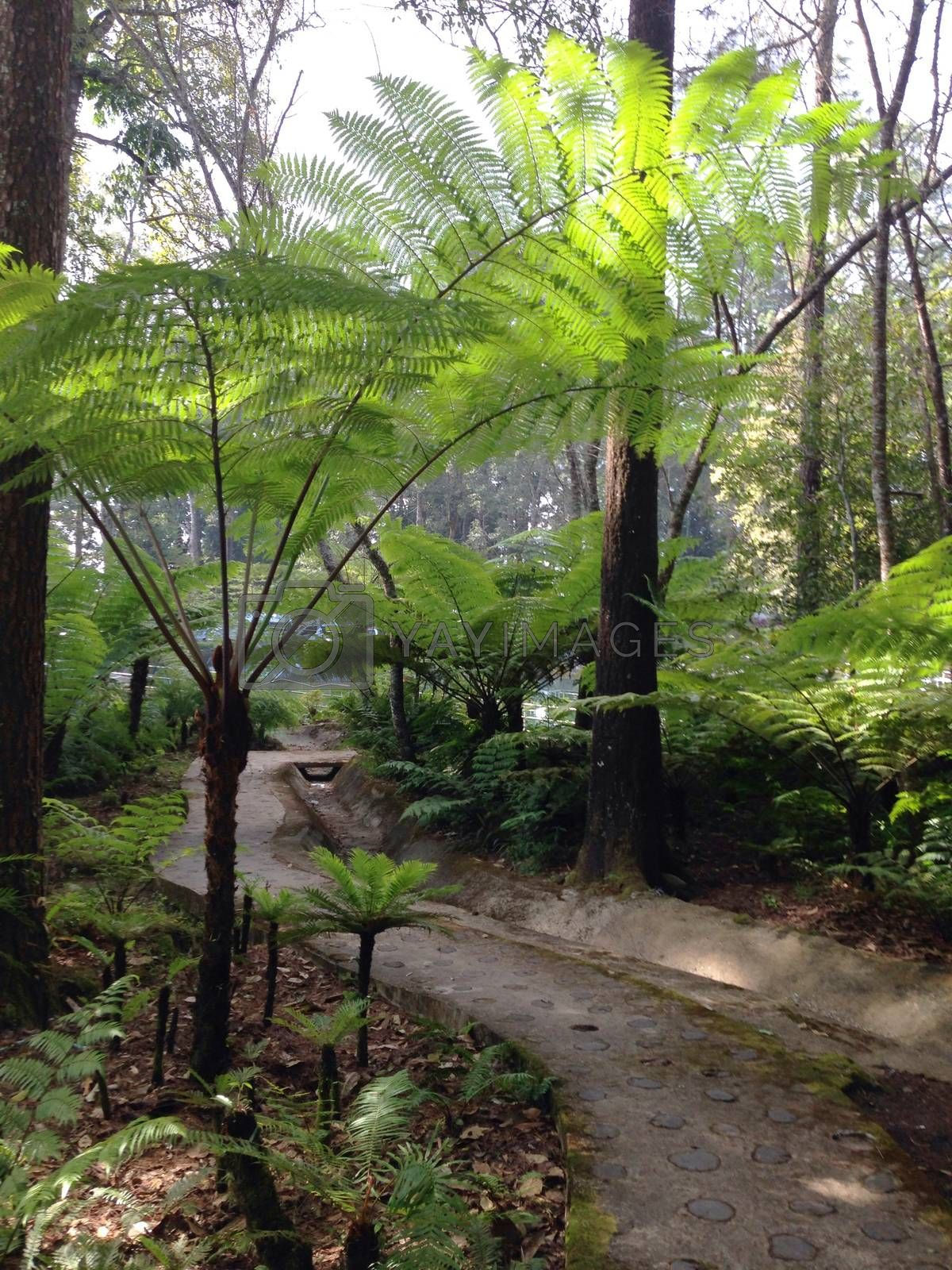 Royalty free image of the fern trees in a park , Thailand by pandara