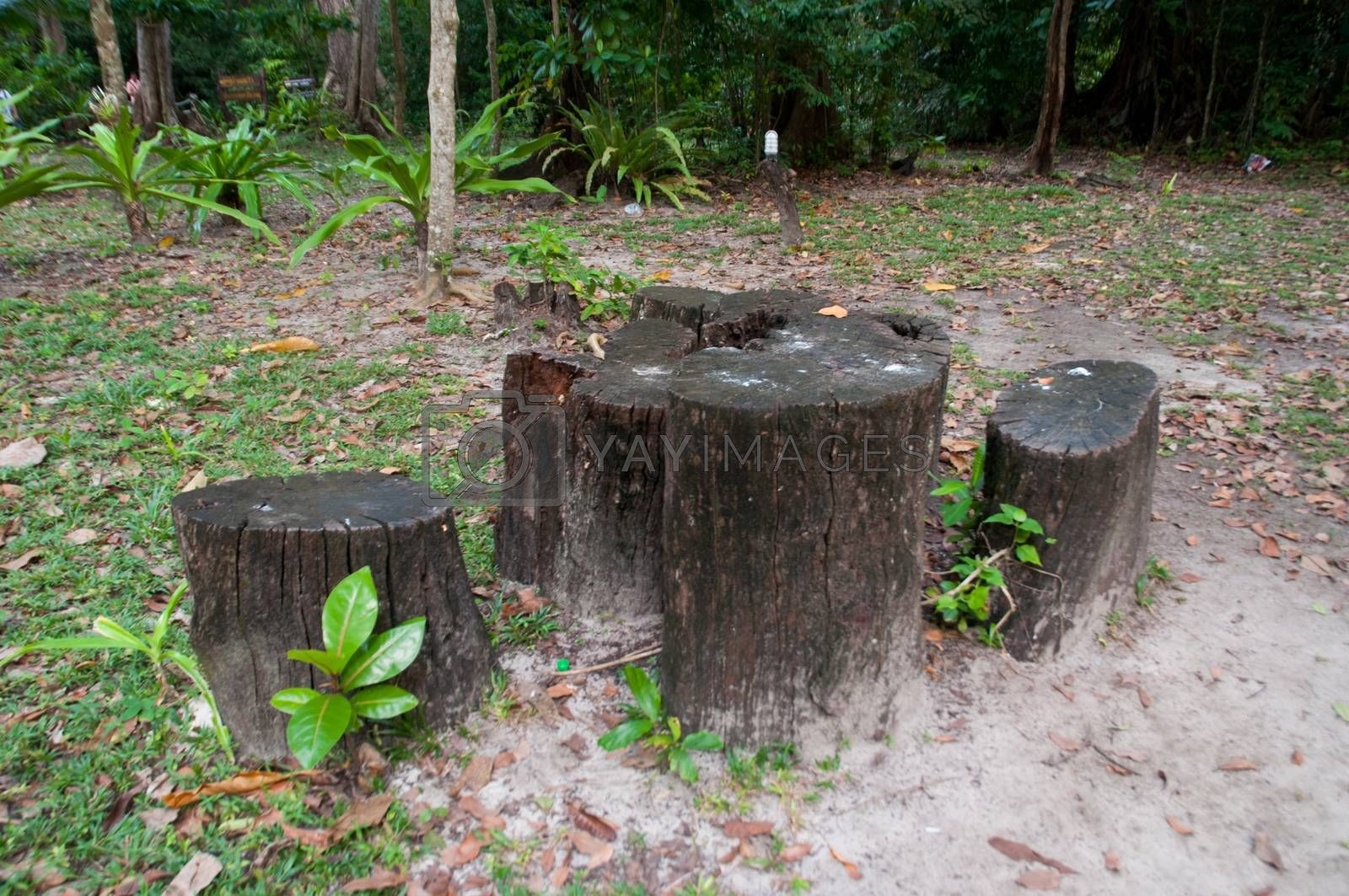 Royalty free image of the natural chair made from log on park by pandara