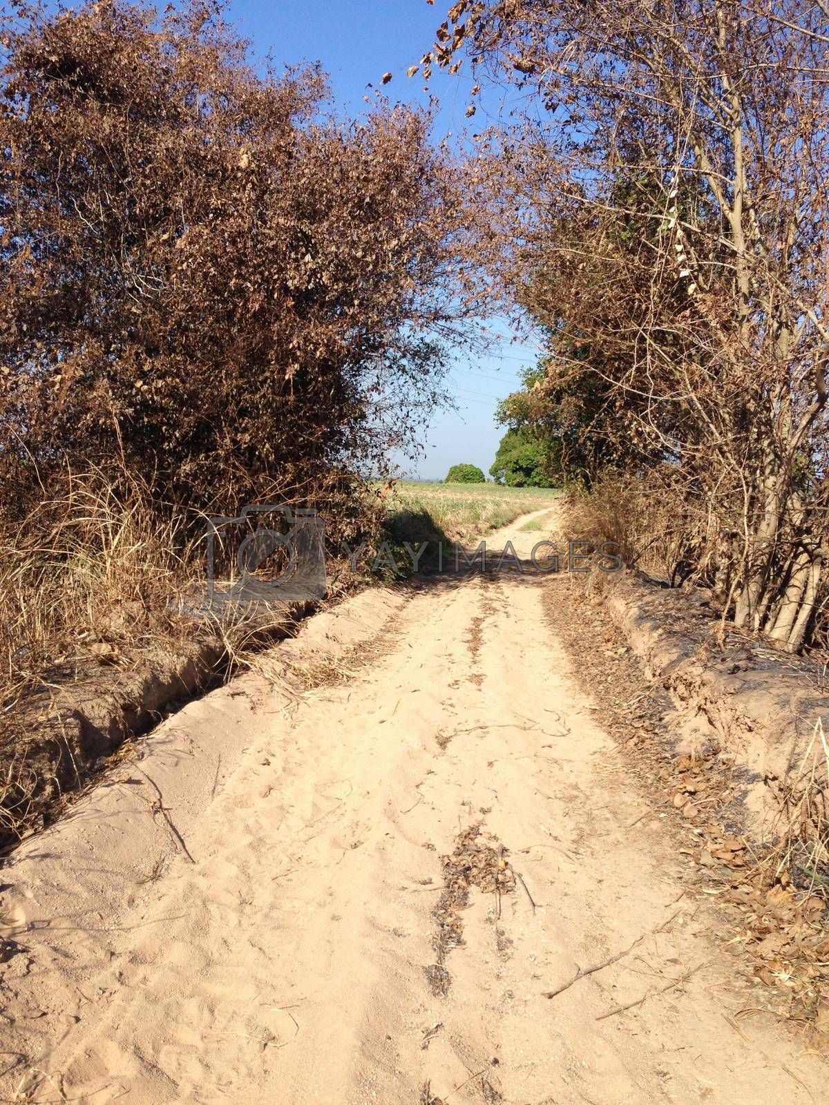 Royalty free image of the sand path for trail by pandara
