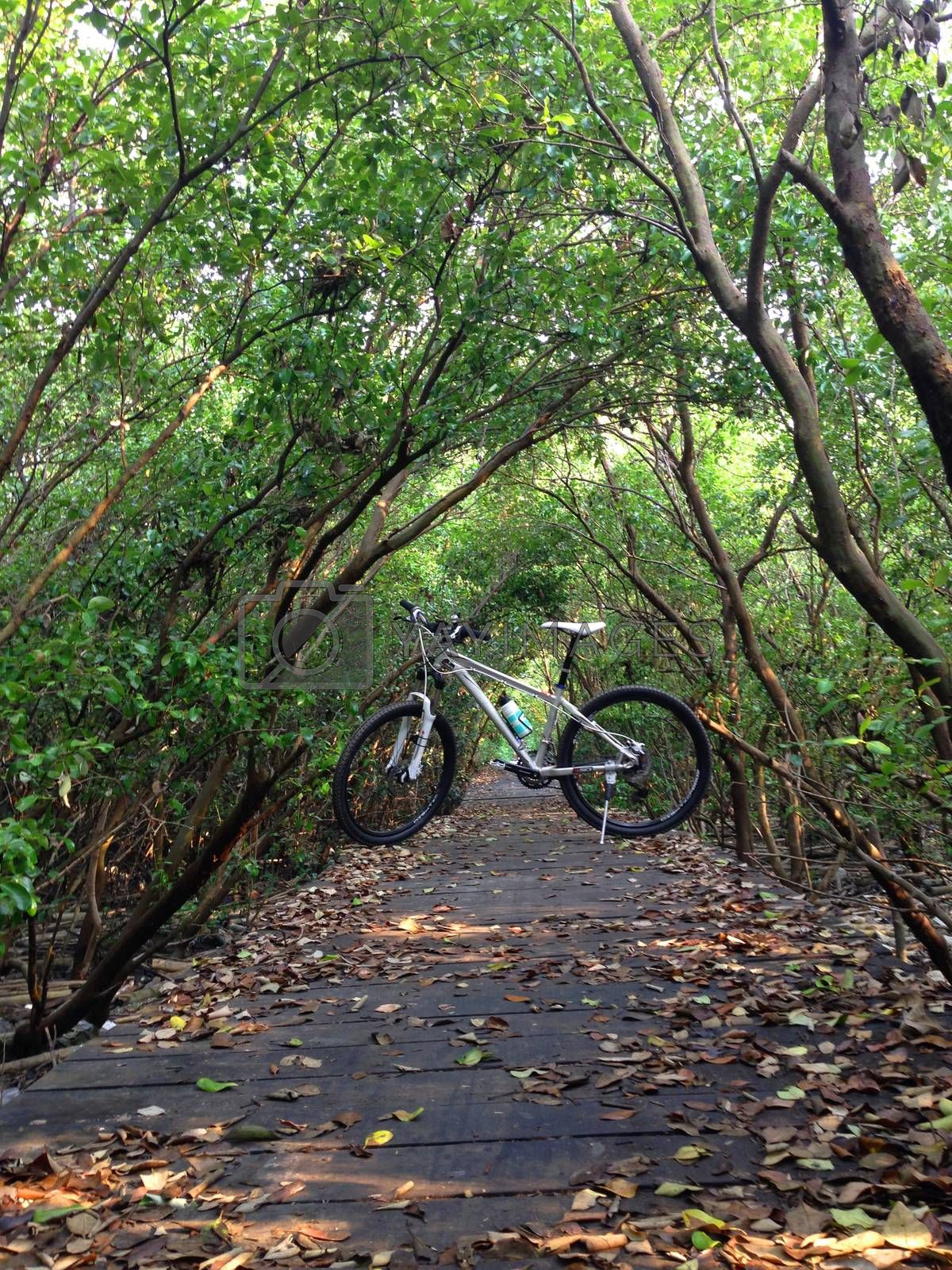 Royalty free image of the bike on a wood path in forest by pandara