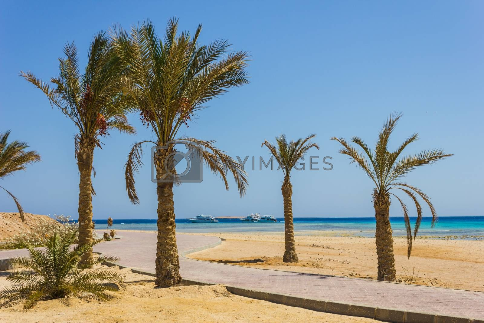 Royalty free image of Palm trees on the beach by oleg_zhukov
