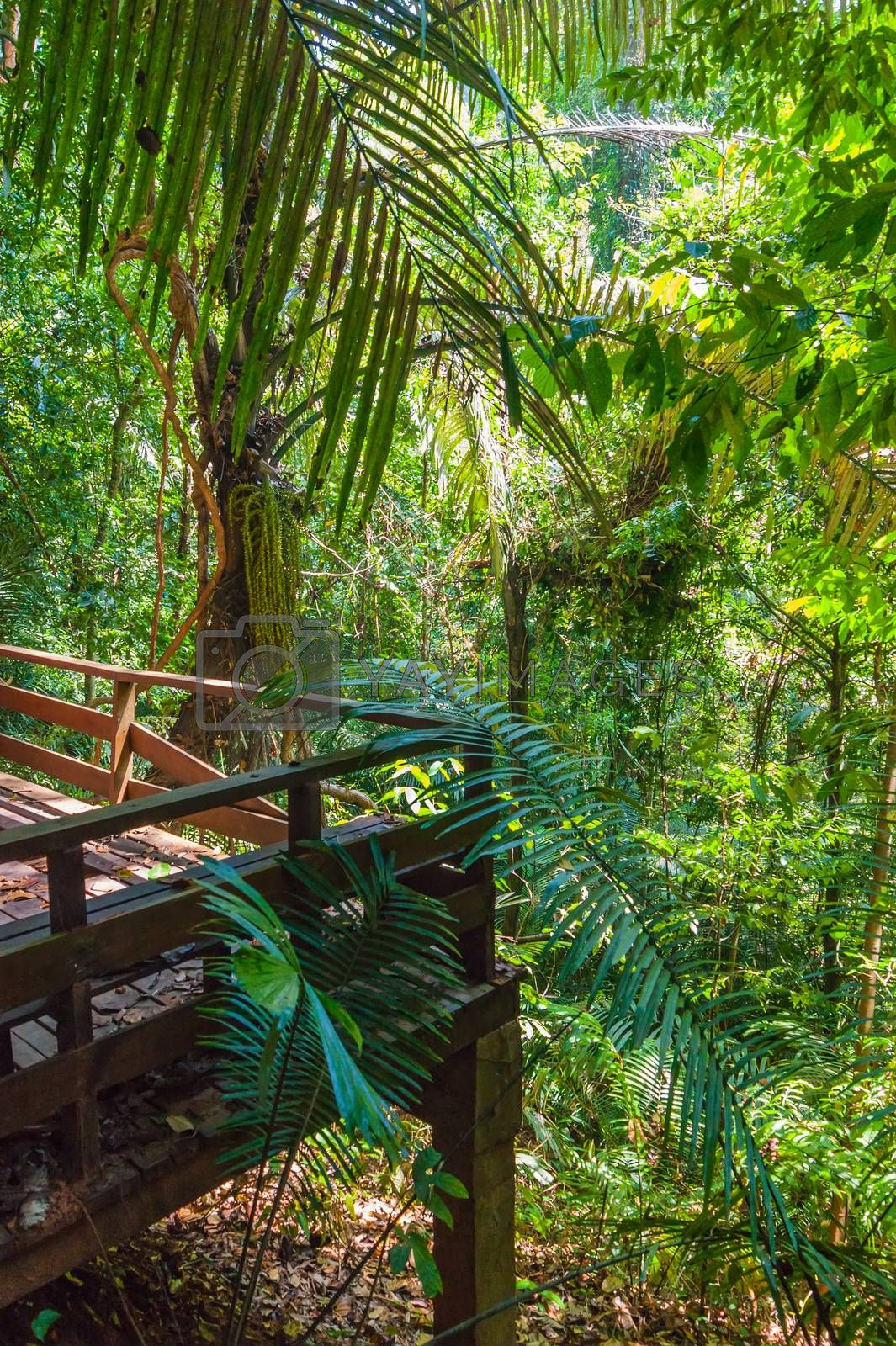 Royalty free image of tropical jungles of South East Asia by oleg_zhukov