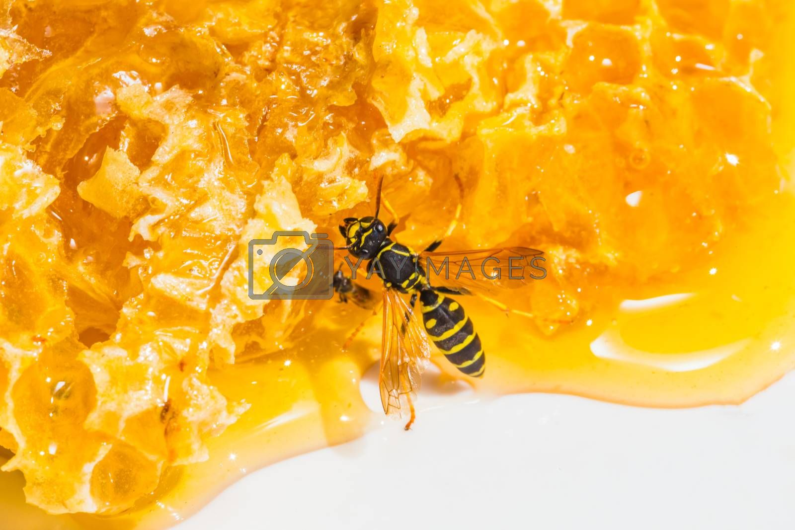 Royalty free image of close-up pieces of honeycomb with honey by oleg_zhukov