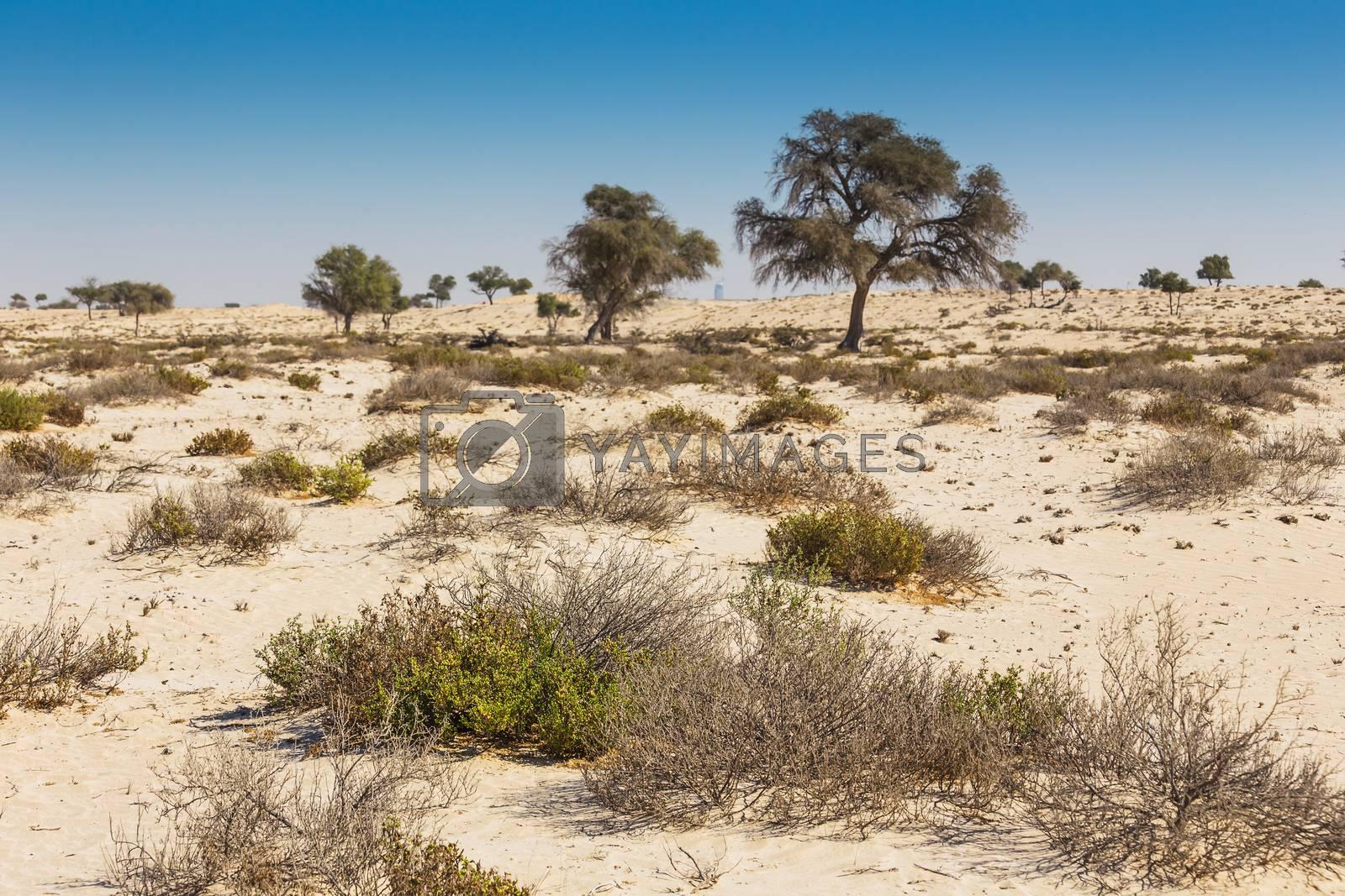 Royalty free image of  Arabian desert by oleg_zhukov