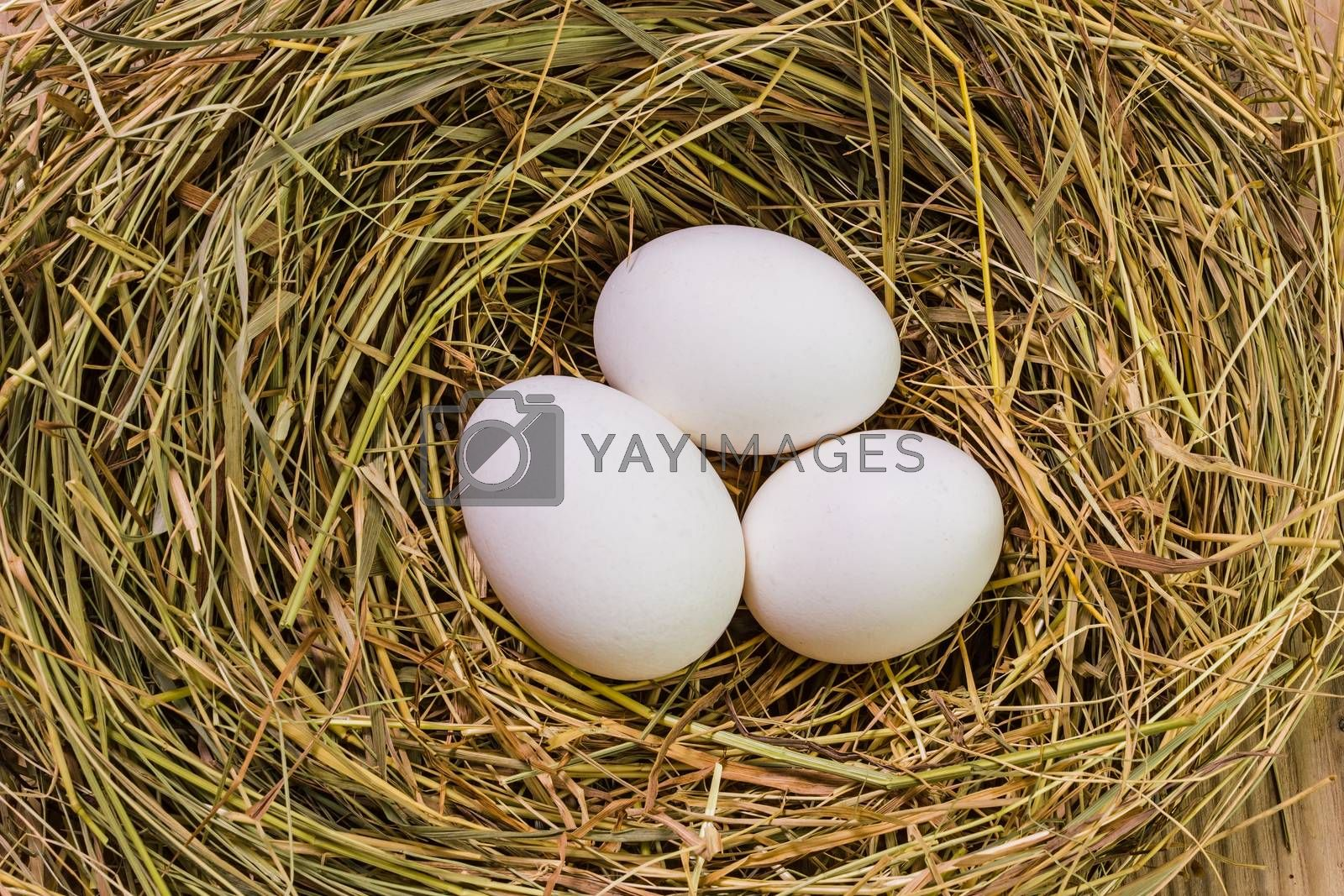 Royalty free image of Nest with Easter eggs by oleg_zhukov