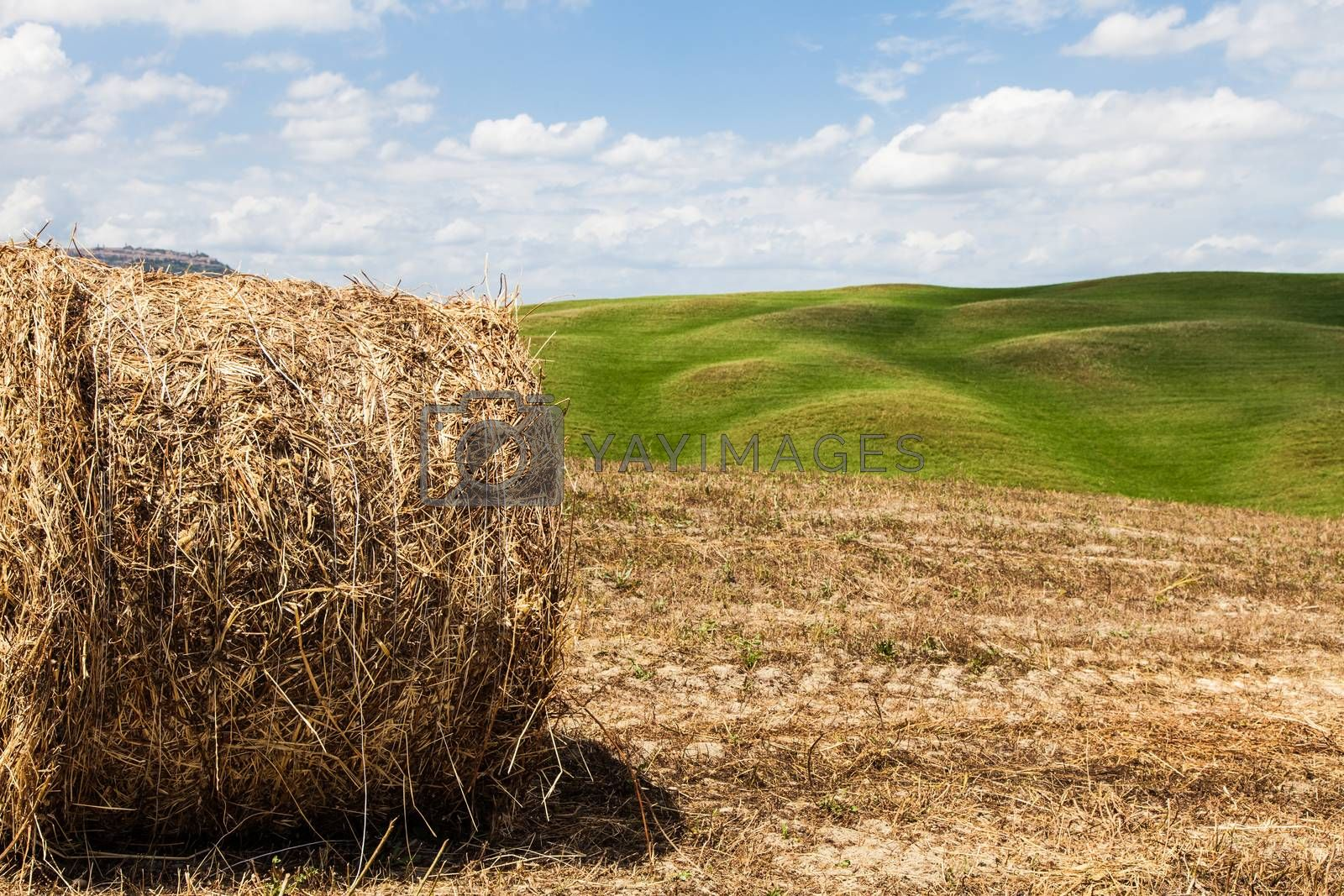 Royalty free image of Tuscany agriculture by Perseomedusa