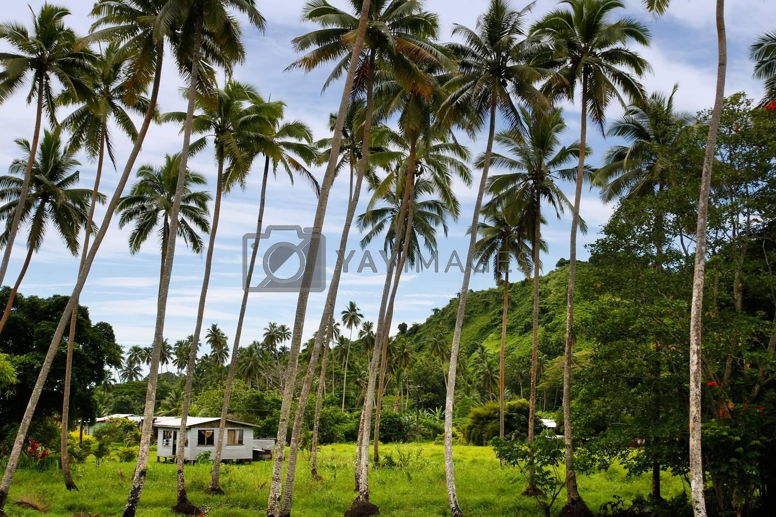 Royalty free image of Local house in palm grove, Vanua Levu island, Fiji by donya_nedomam