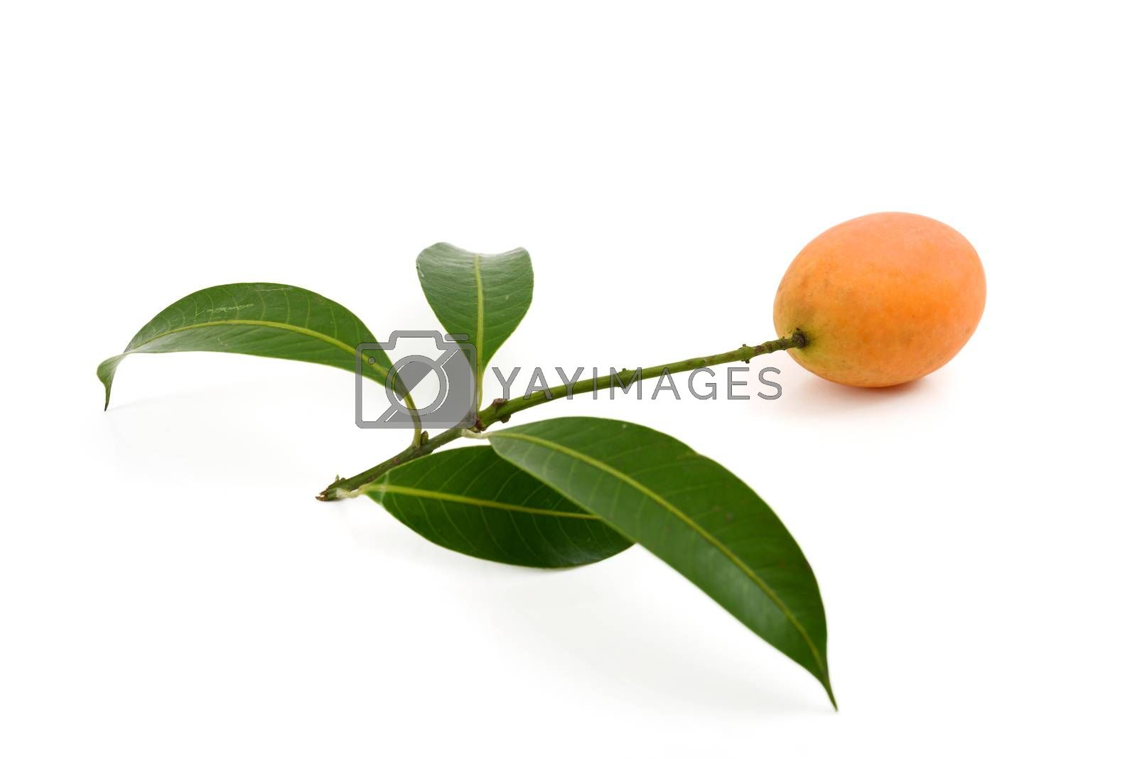 Royalty free image of Maprang Marian Plum by antpkr