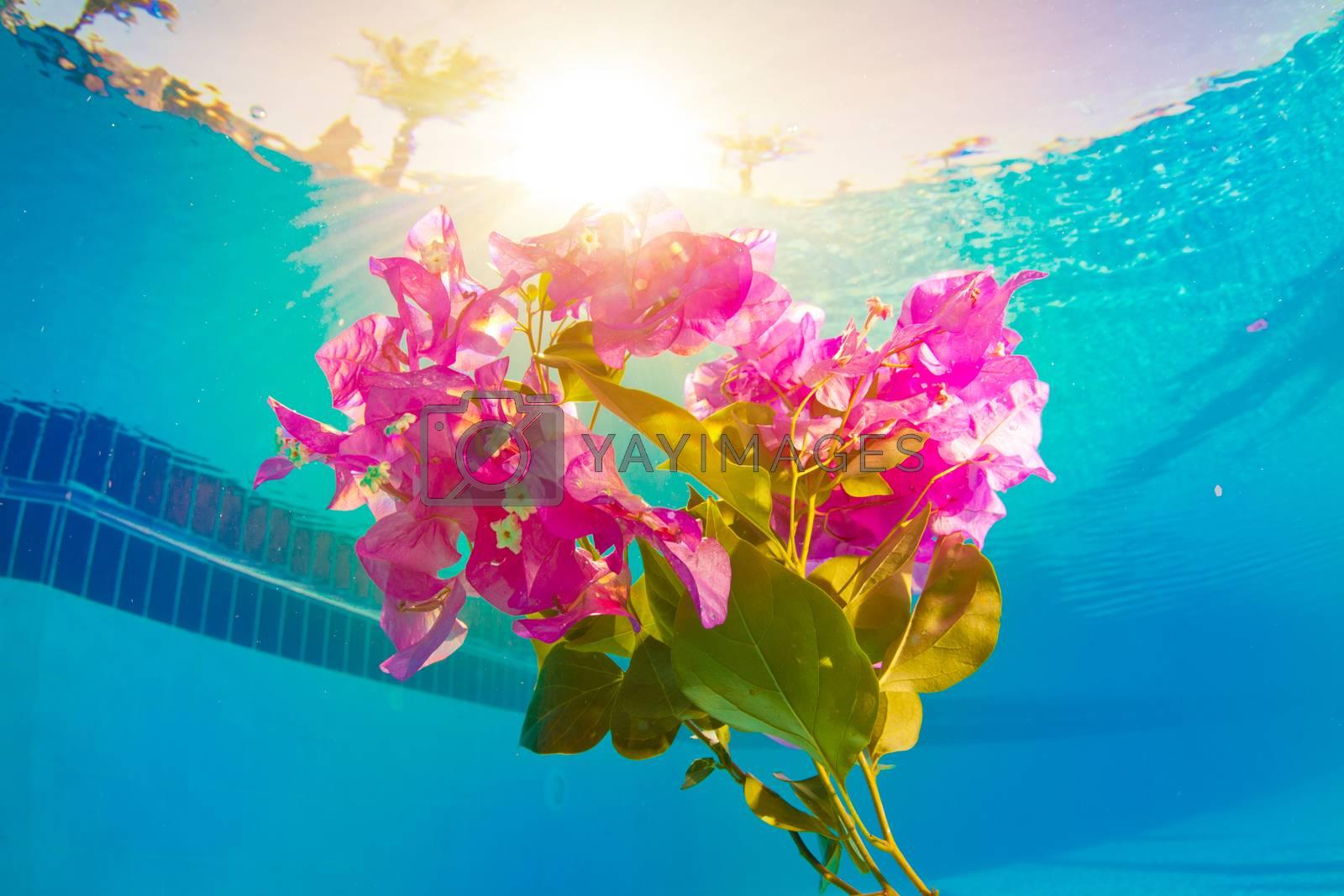 bright pink flower underwater