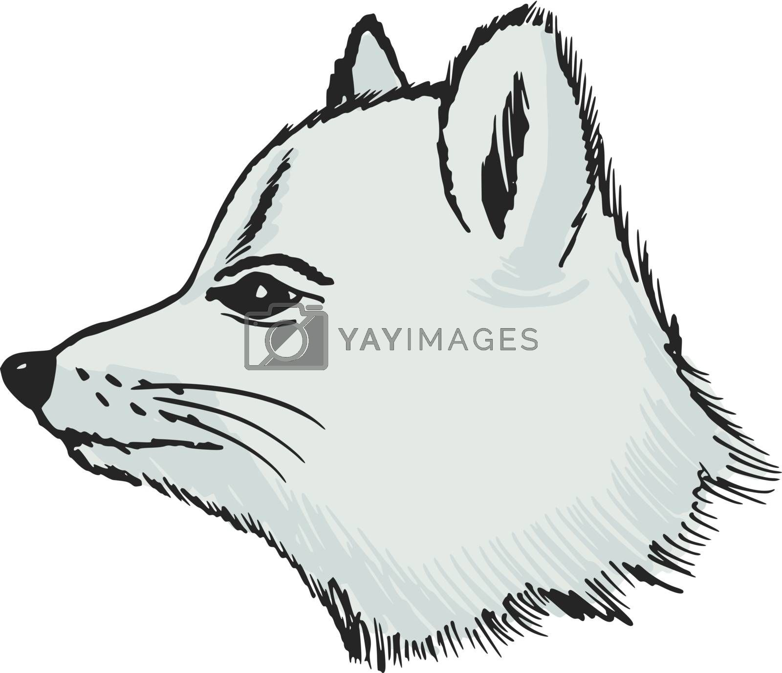 hand drawn, sketch illustration of polar fox