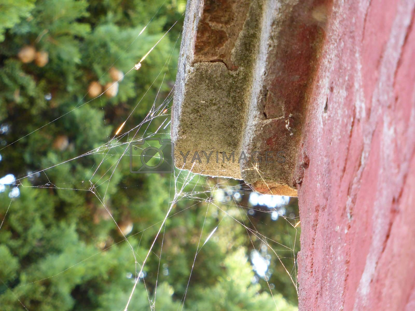 Royalty free image of Spiderweb on old wall and sunlight by paocasa