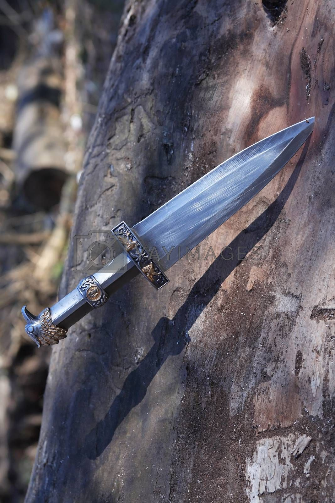 Royalty free image of Dagger In Wood by kvkirillov