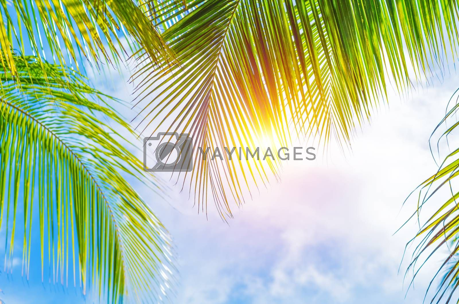 Royalty free image of Palm leaves border by Anna_Omelchenko
