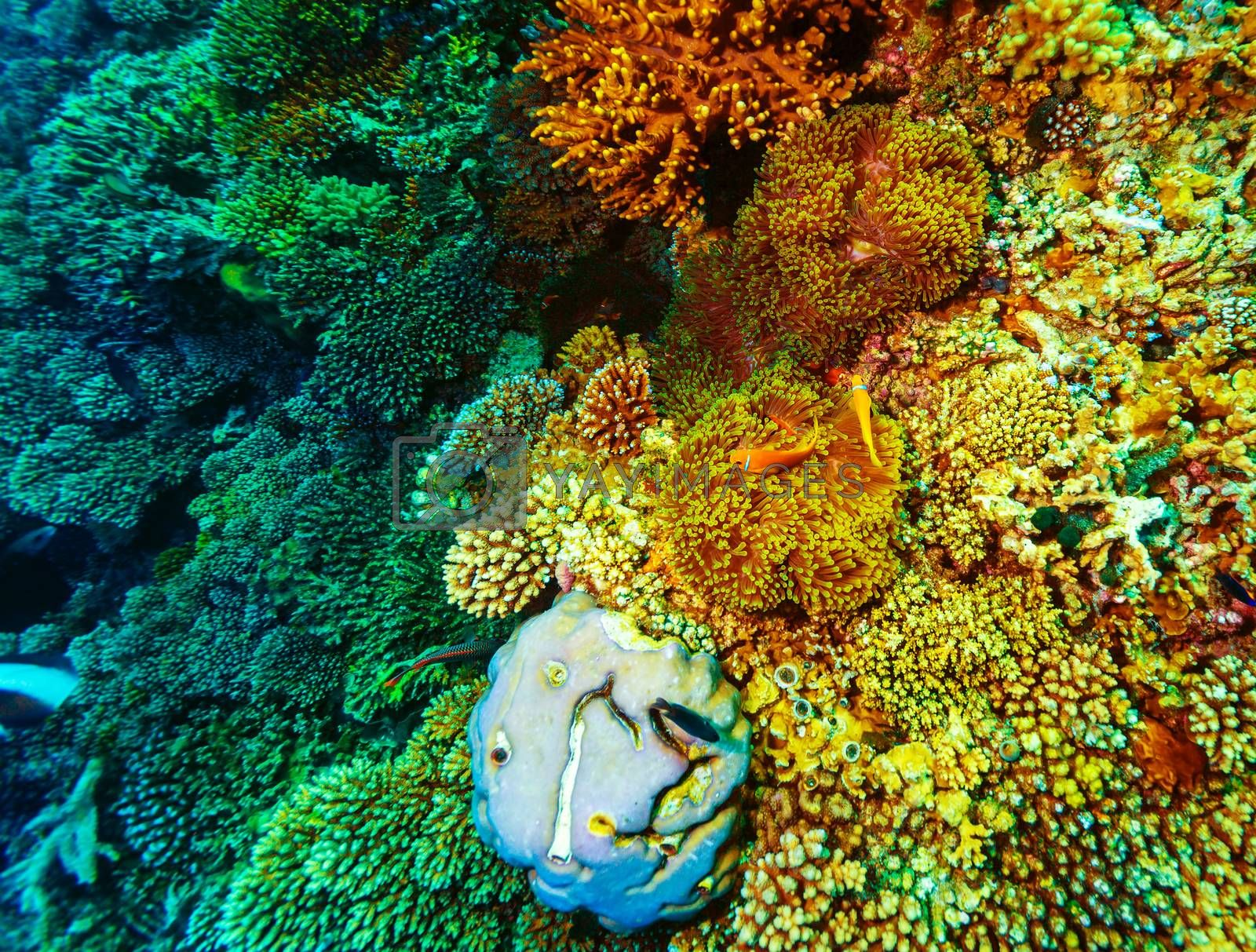 Royalty free image of Underwater coral background by Anna_Omelchenko