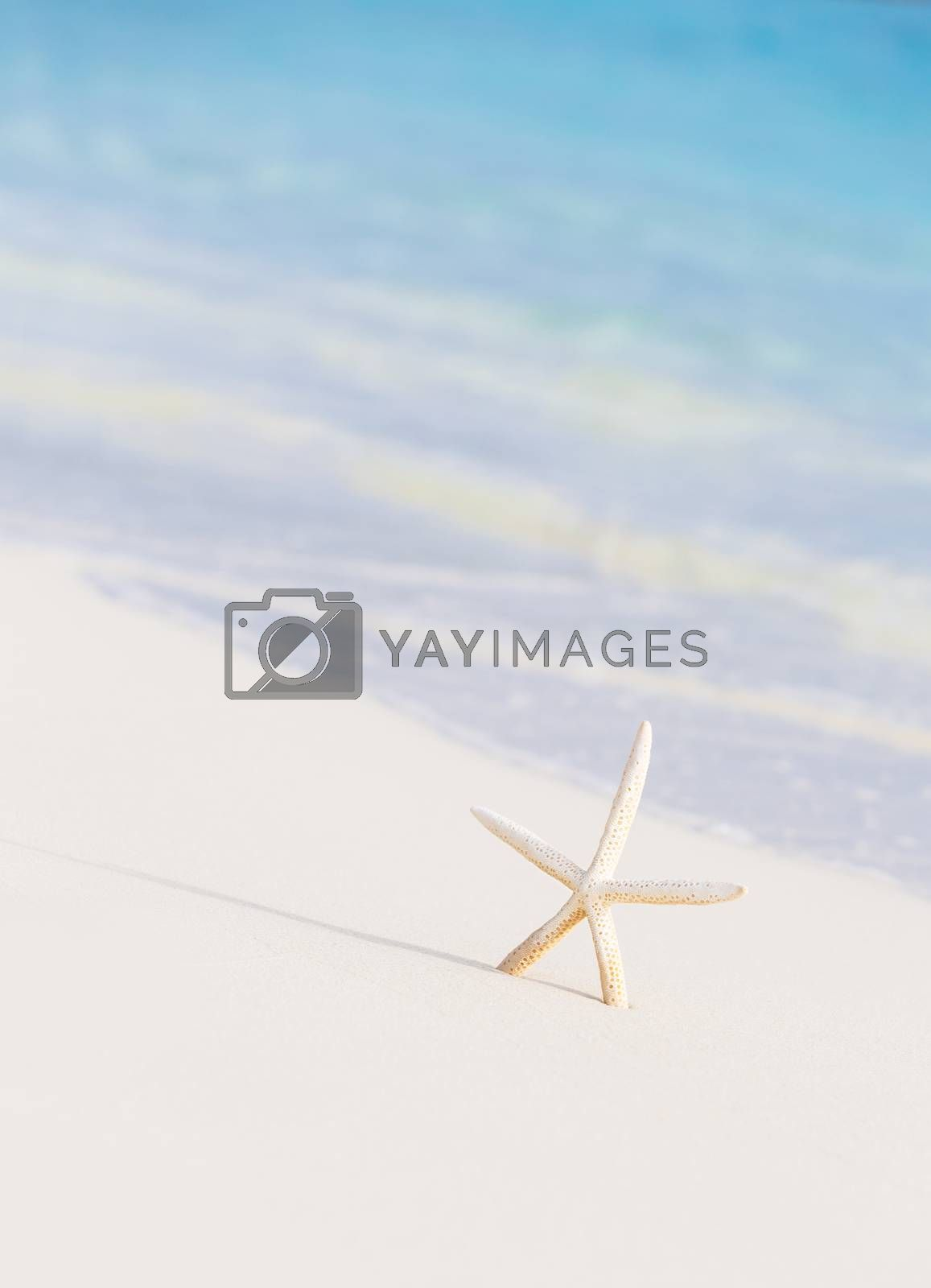 Royalty free image of Cute little white sea star by Anna_Omelchenko