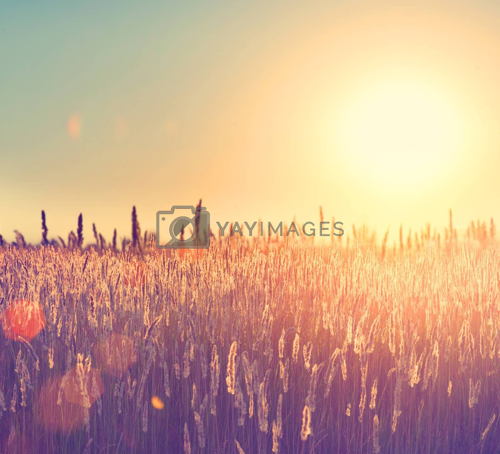 Field. Rural Landscape under Shining Sunlight
