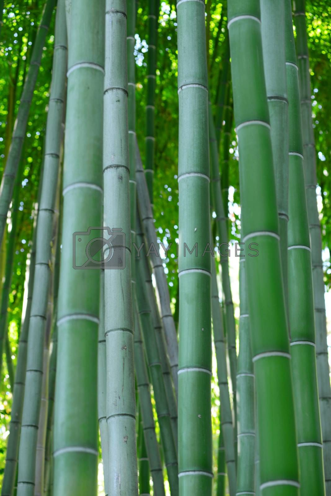 bamboo forest by porbital