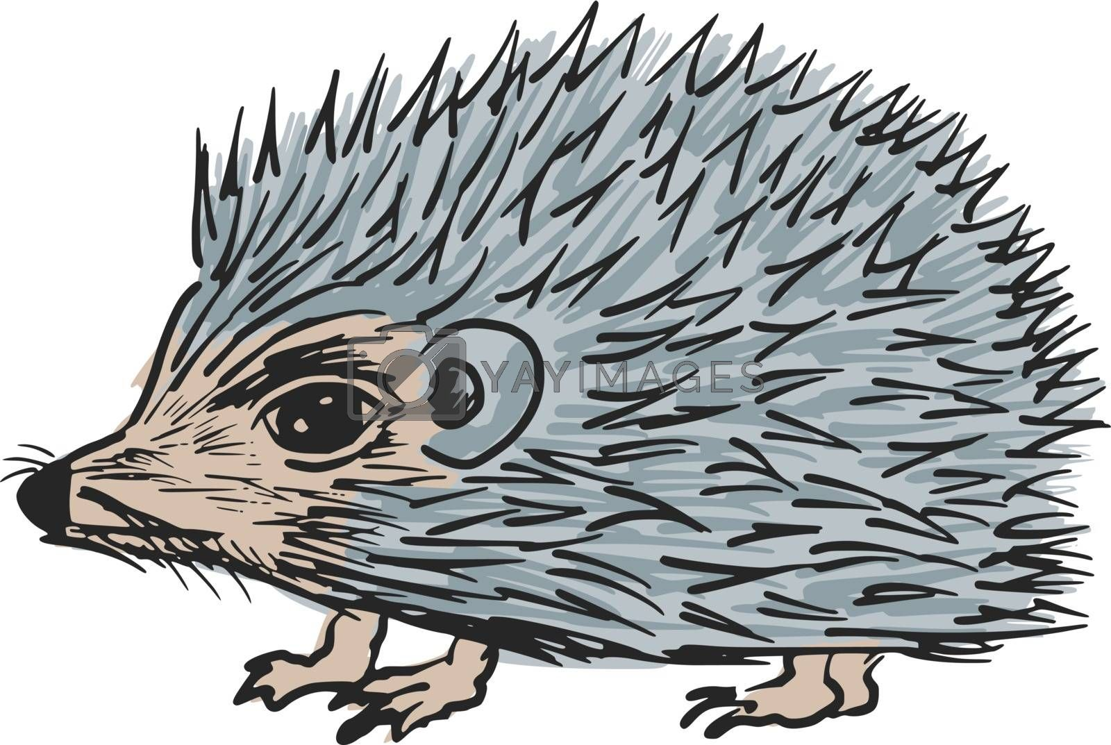 hand drawn, sketch, cartoon illustration of hedgehog