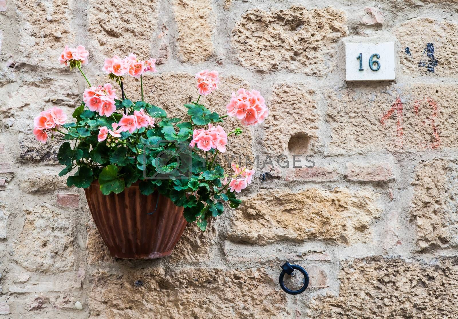 Royalty free image of Tuscan flowers by Perseomedusa