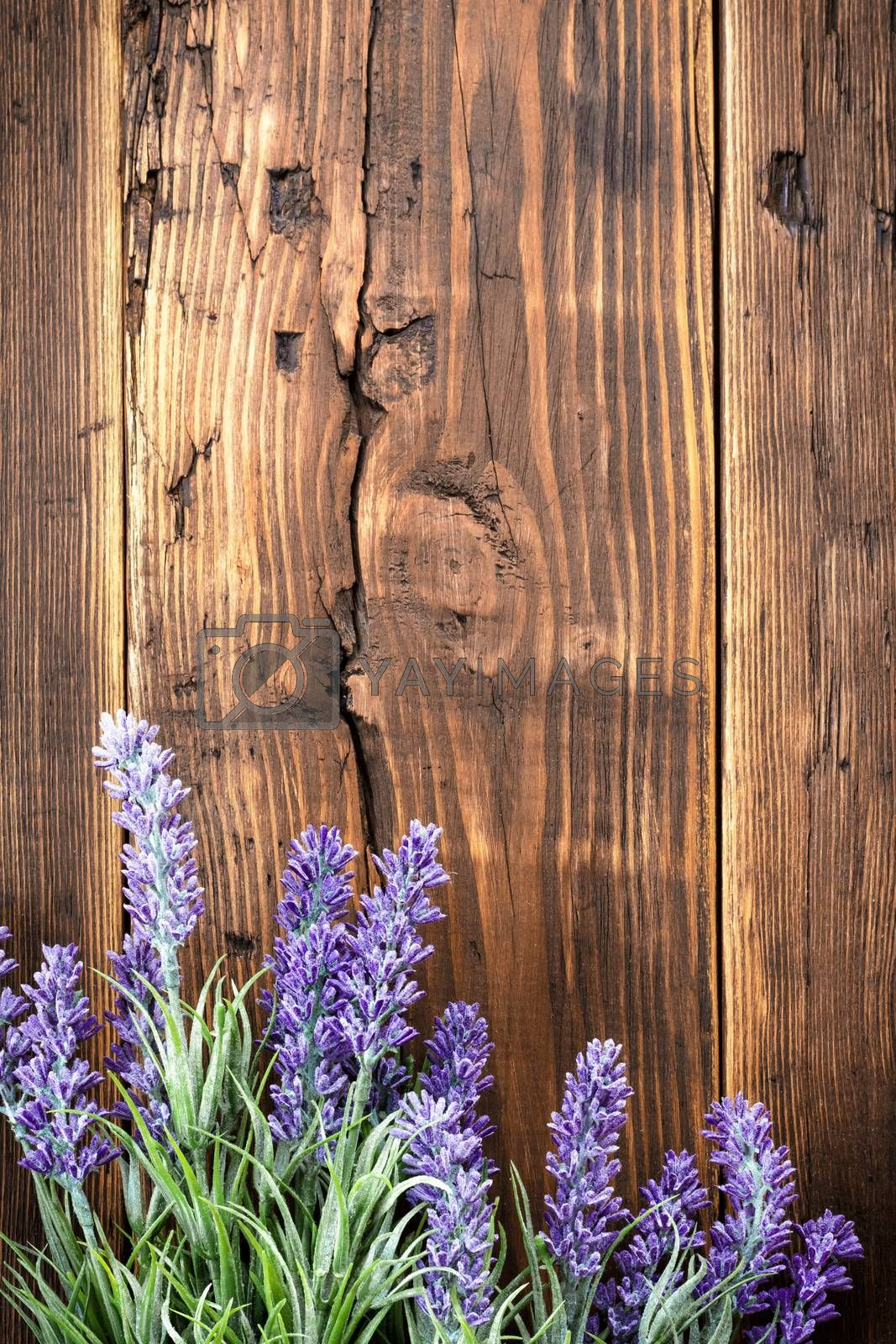 Royalty free image of Lavender by yelenayemchuk