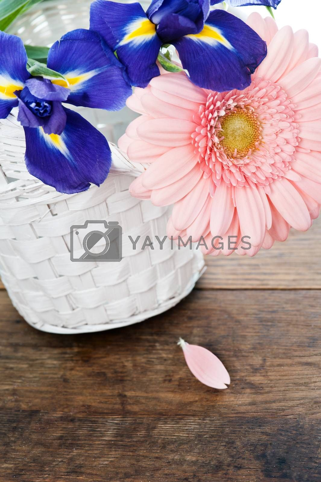 Blue irisis and pink gerbera daisy flower in white basket on wooden table. Vintage style