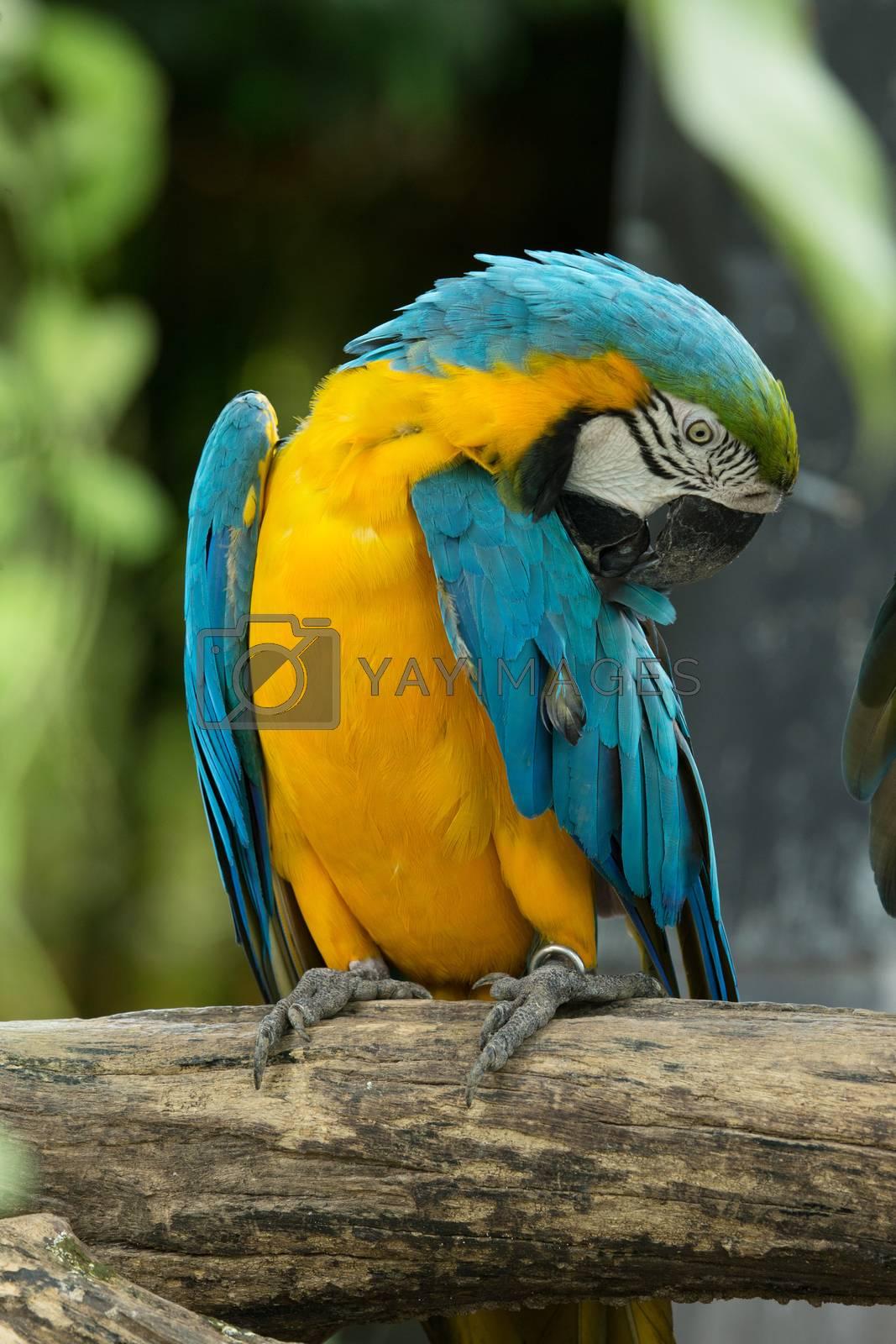 macaw bird sitting on the tree