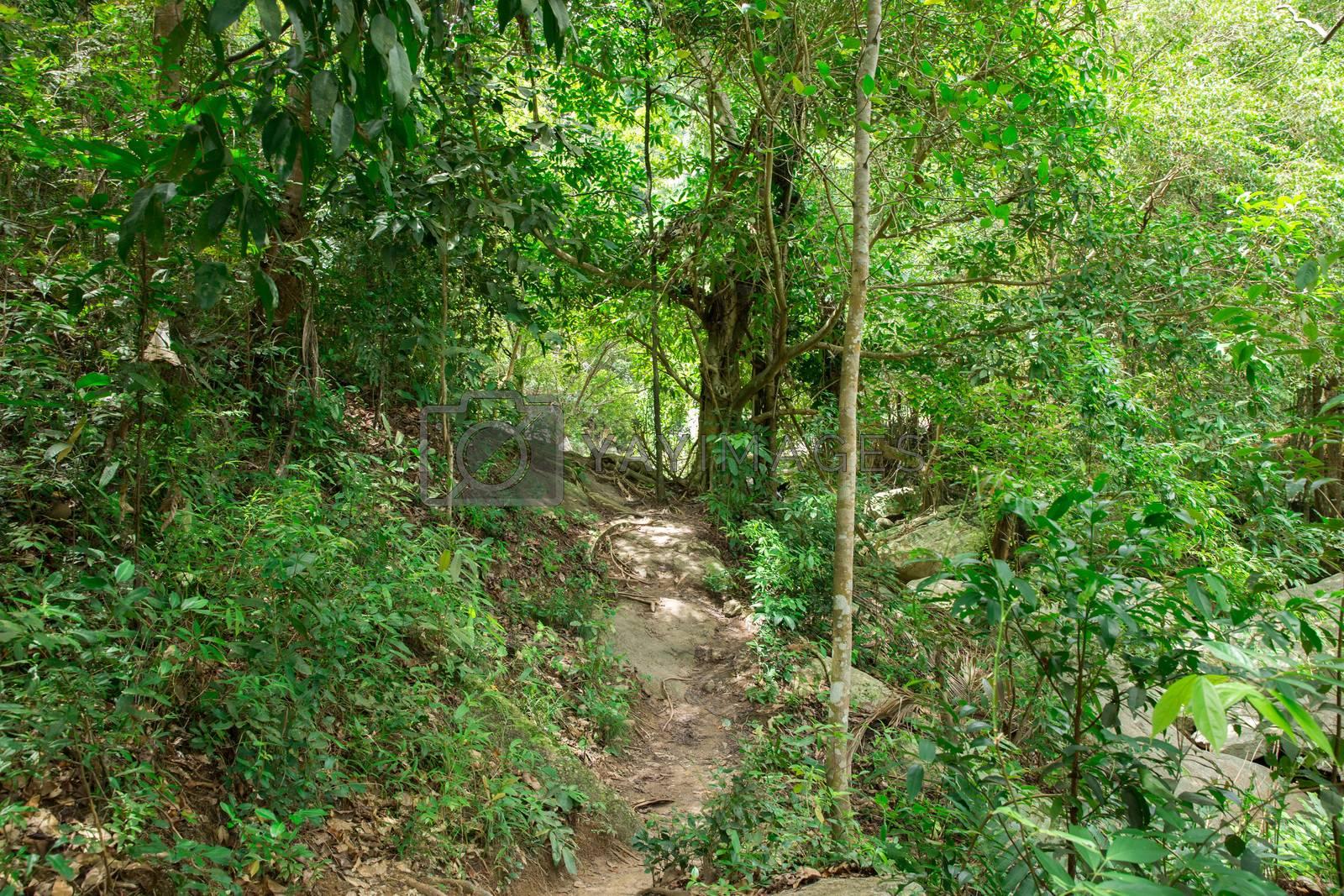 jungle by Pakhnyushchyy